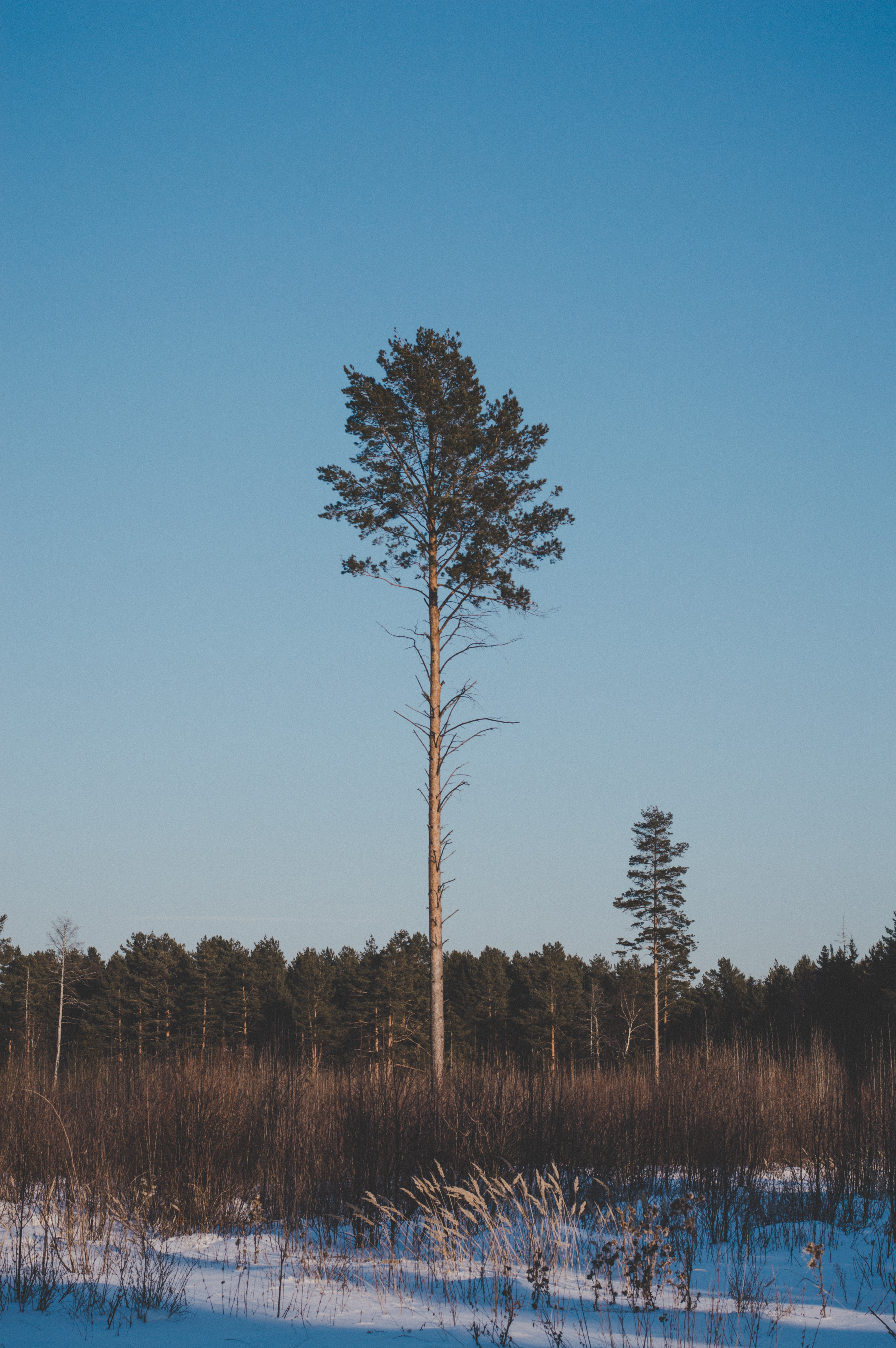 Landscape photography of green leaf tree