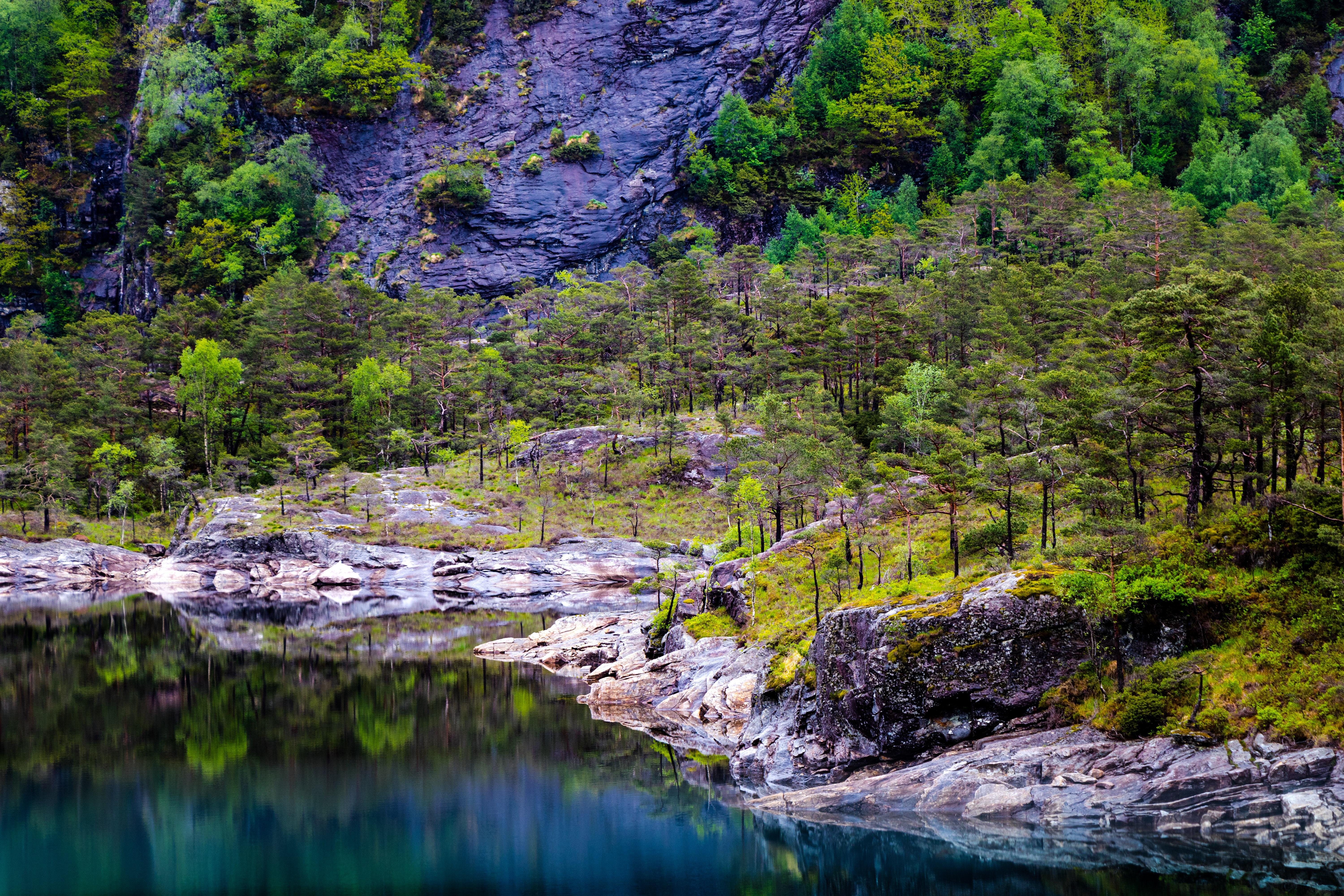 Landscape photography of lake and trees