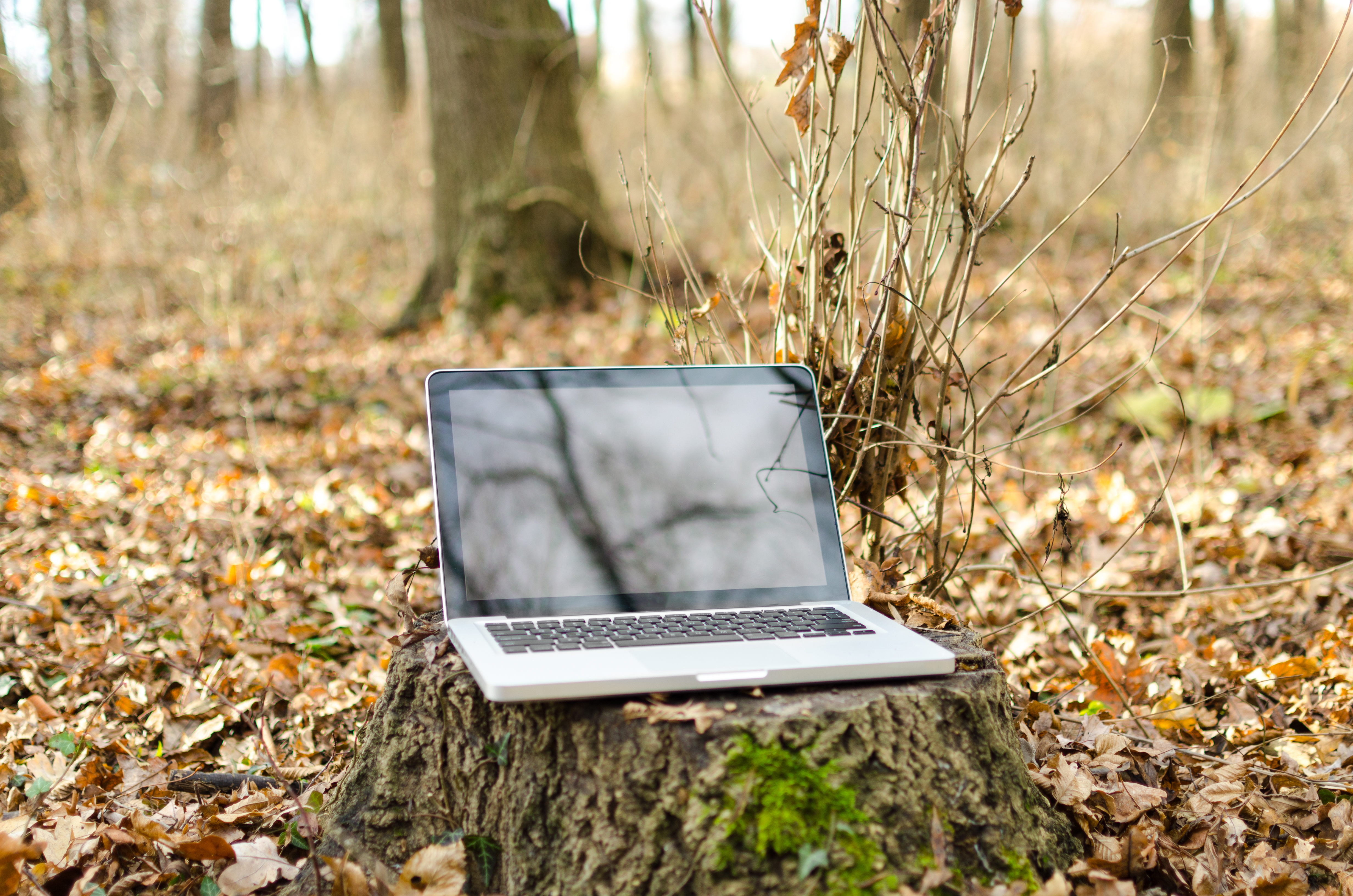 Laptop in autumn forest photo