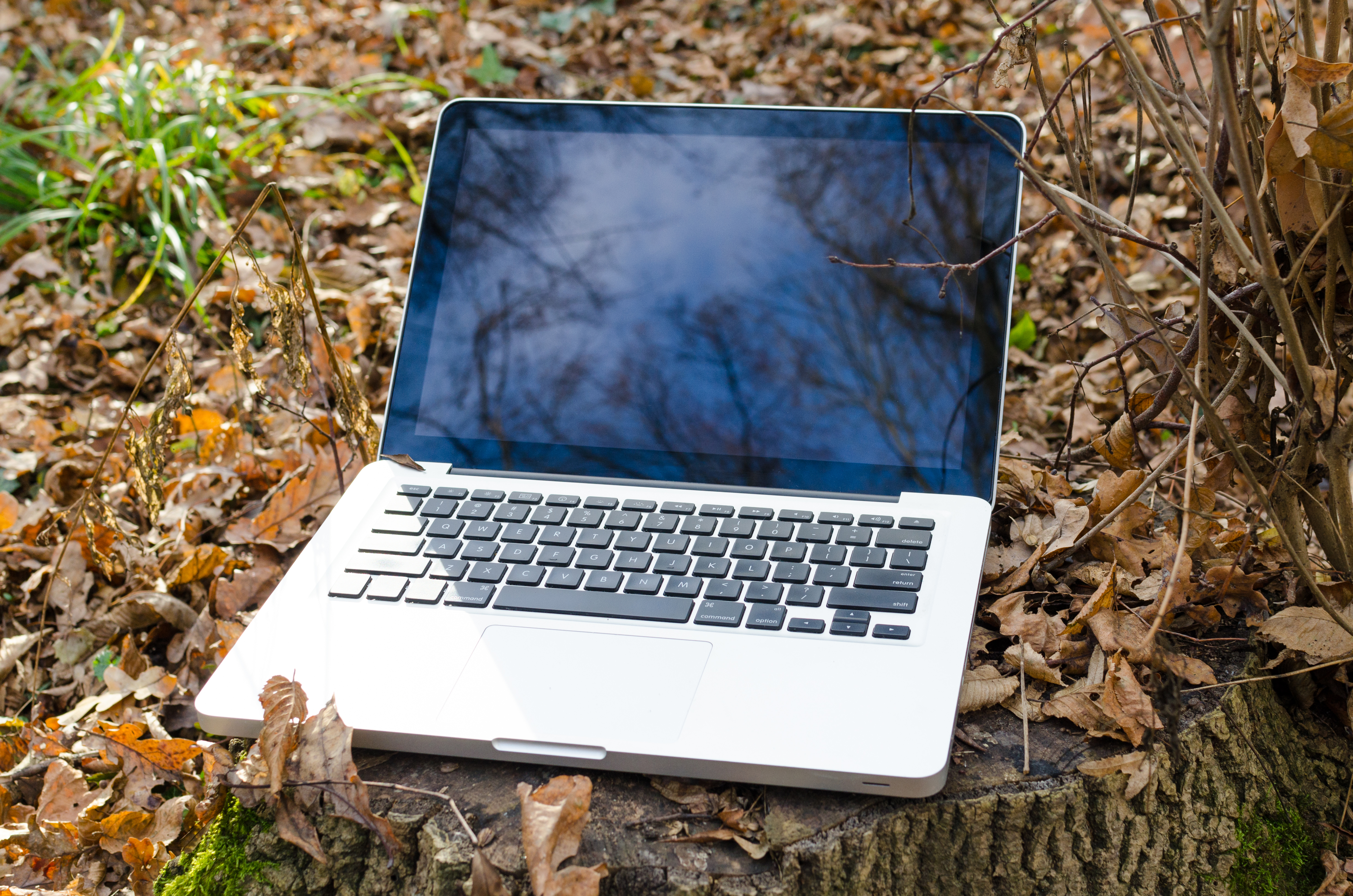 Laptop in forest - nature concept photo