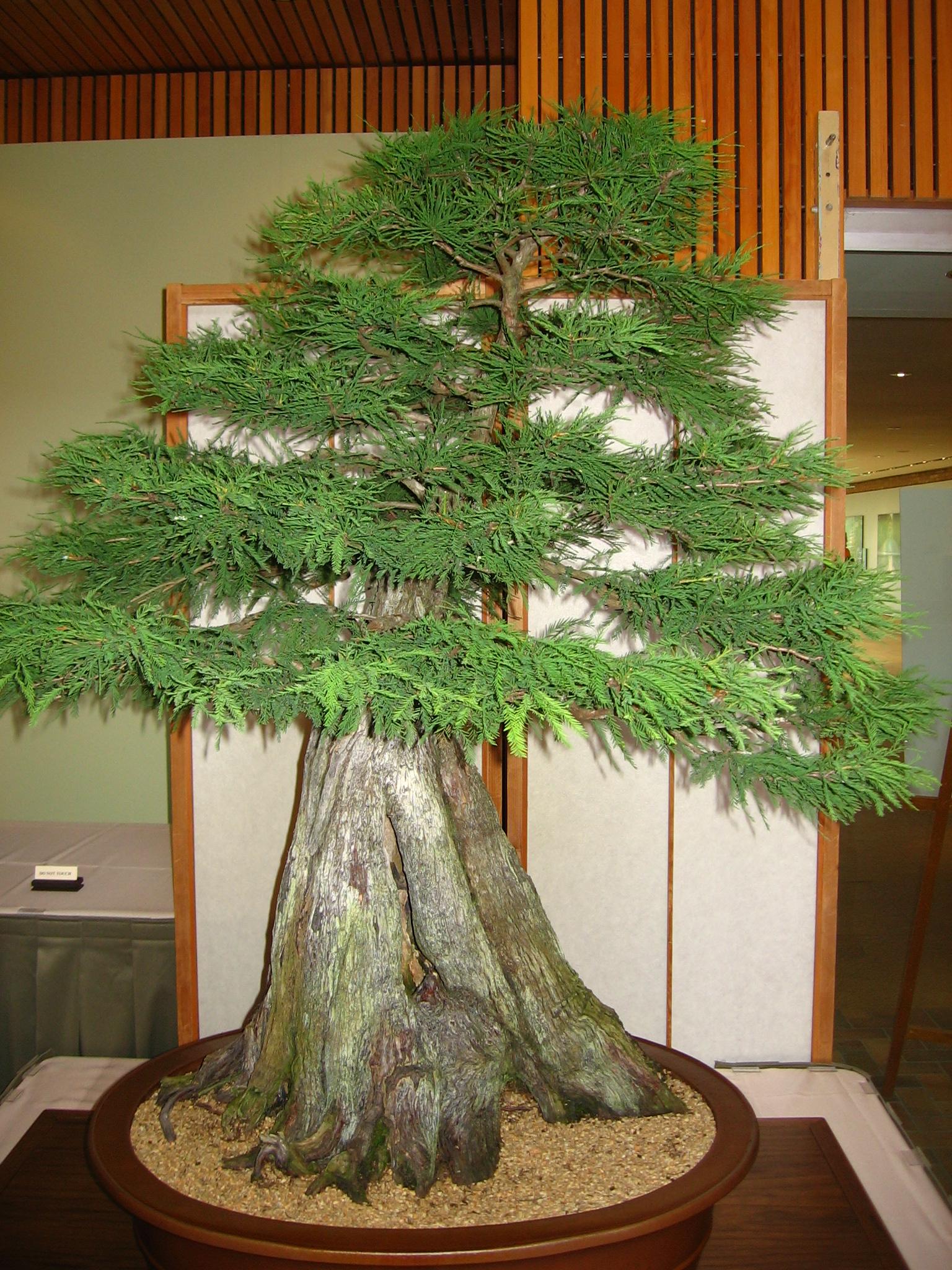 Choose the Bonsai Tree that Fits your Lifestyle - Bonsai Outlet