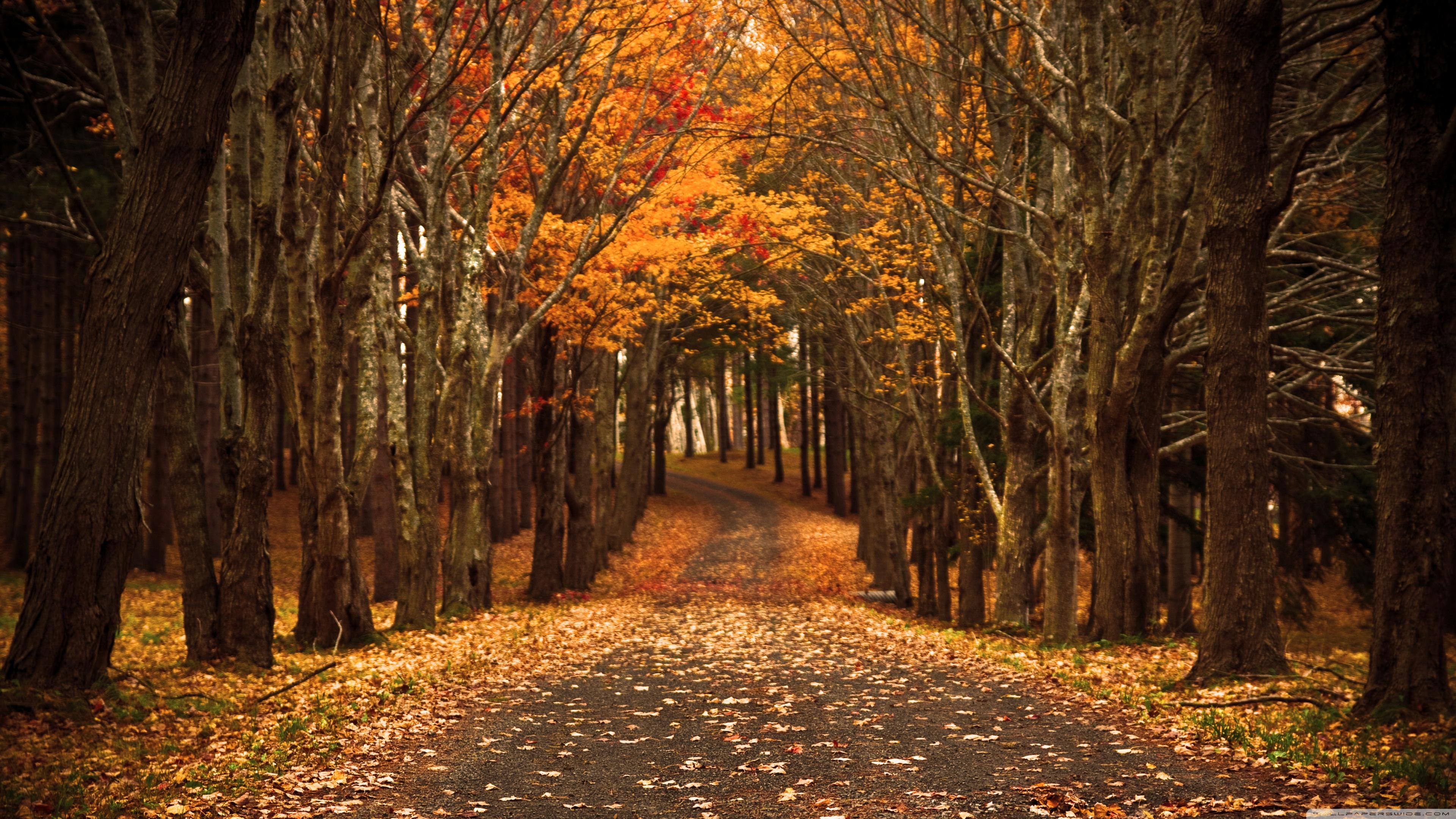 Late autumn photo