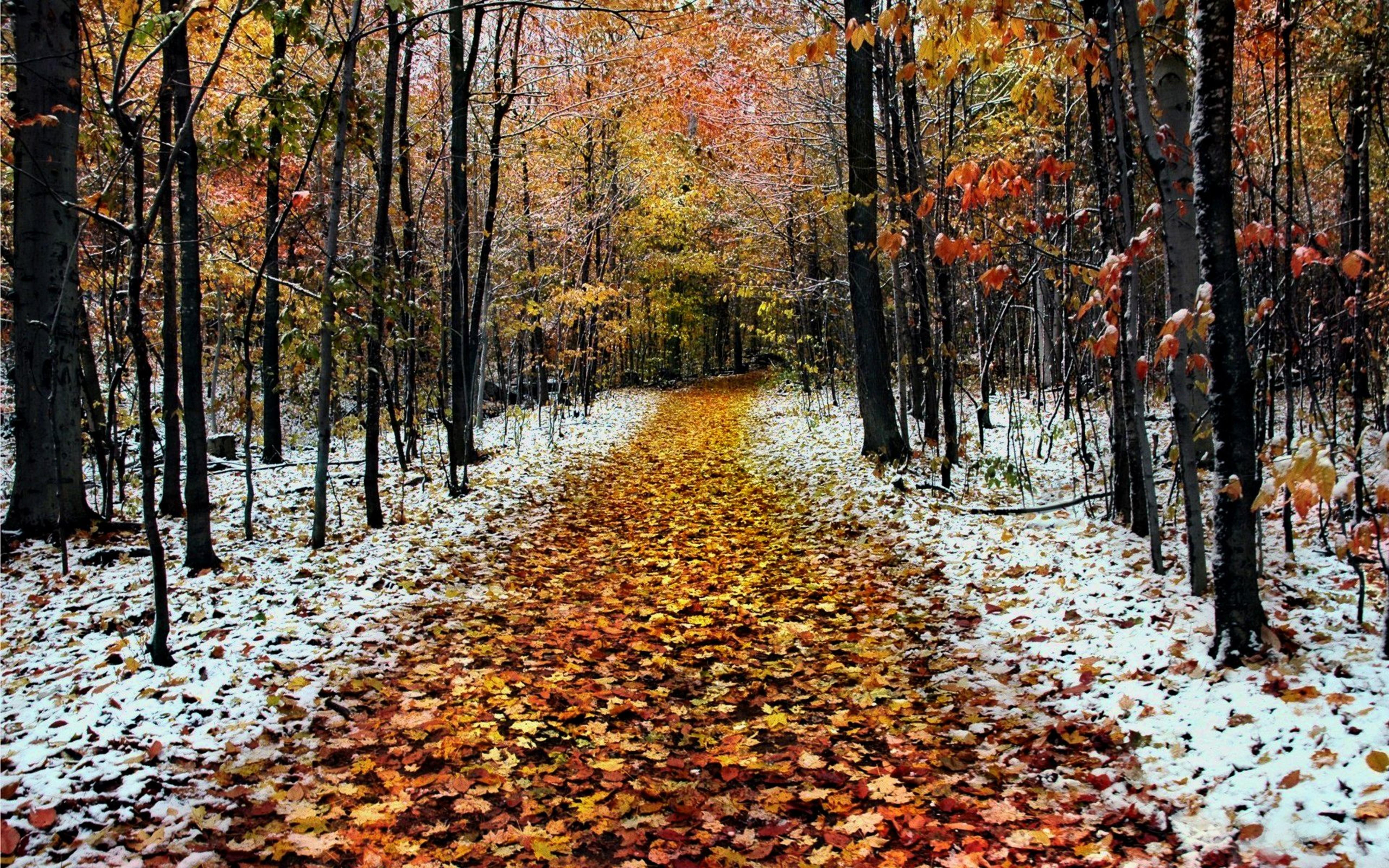 free photo late autumn tree woods wild free. Black Bedroom Furniture Sets. Home Design Ideas