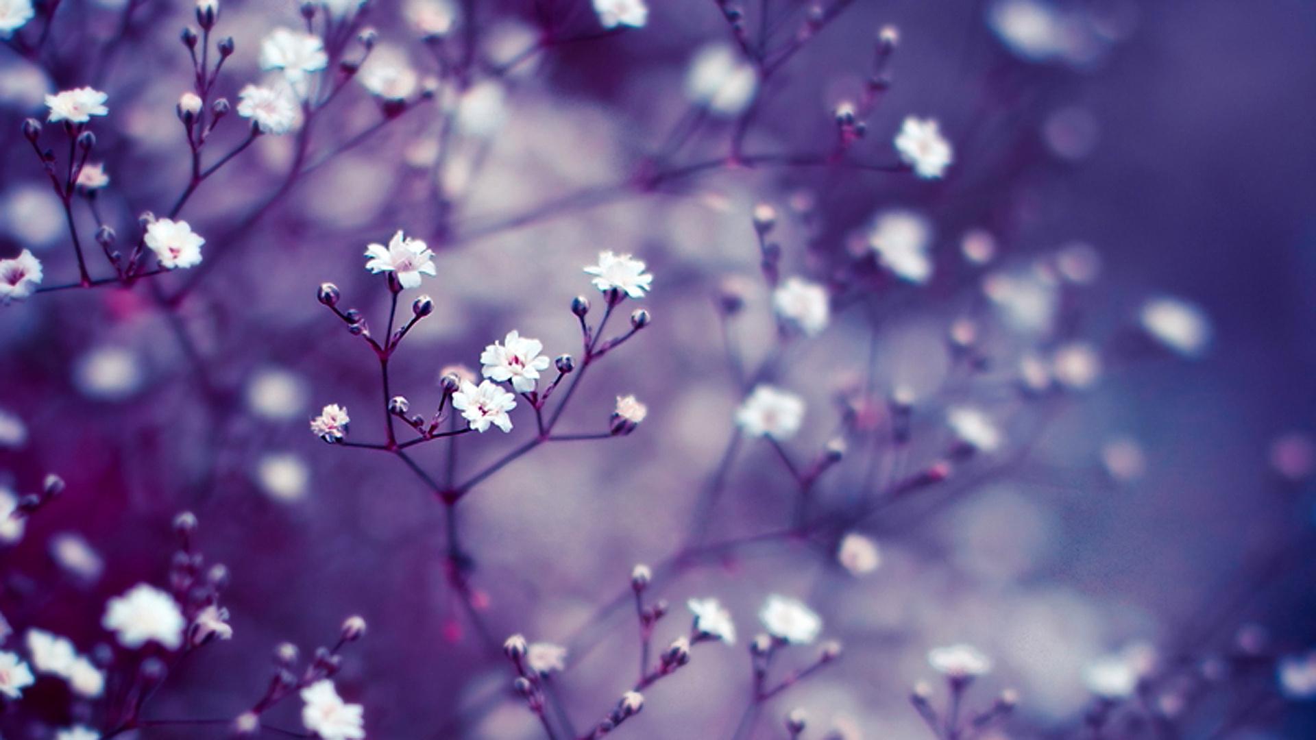 Free Photo Purple Flower Wallpaper Leaves Growth Fresh Flowers