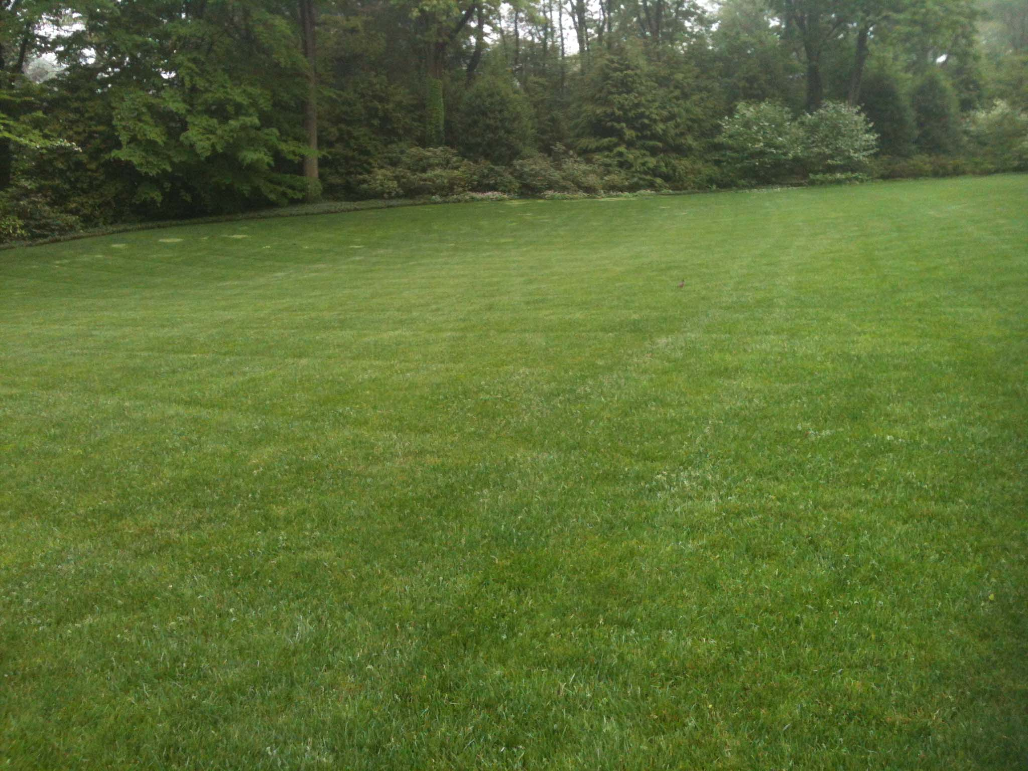 PA Lawn care grass | Delaware Valley Turf Lawn Care Service & Supplies