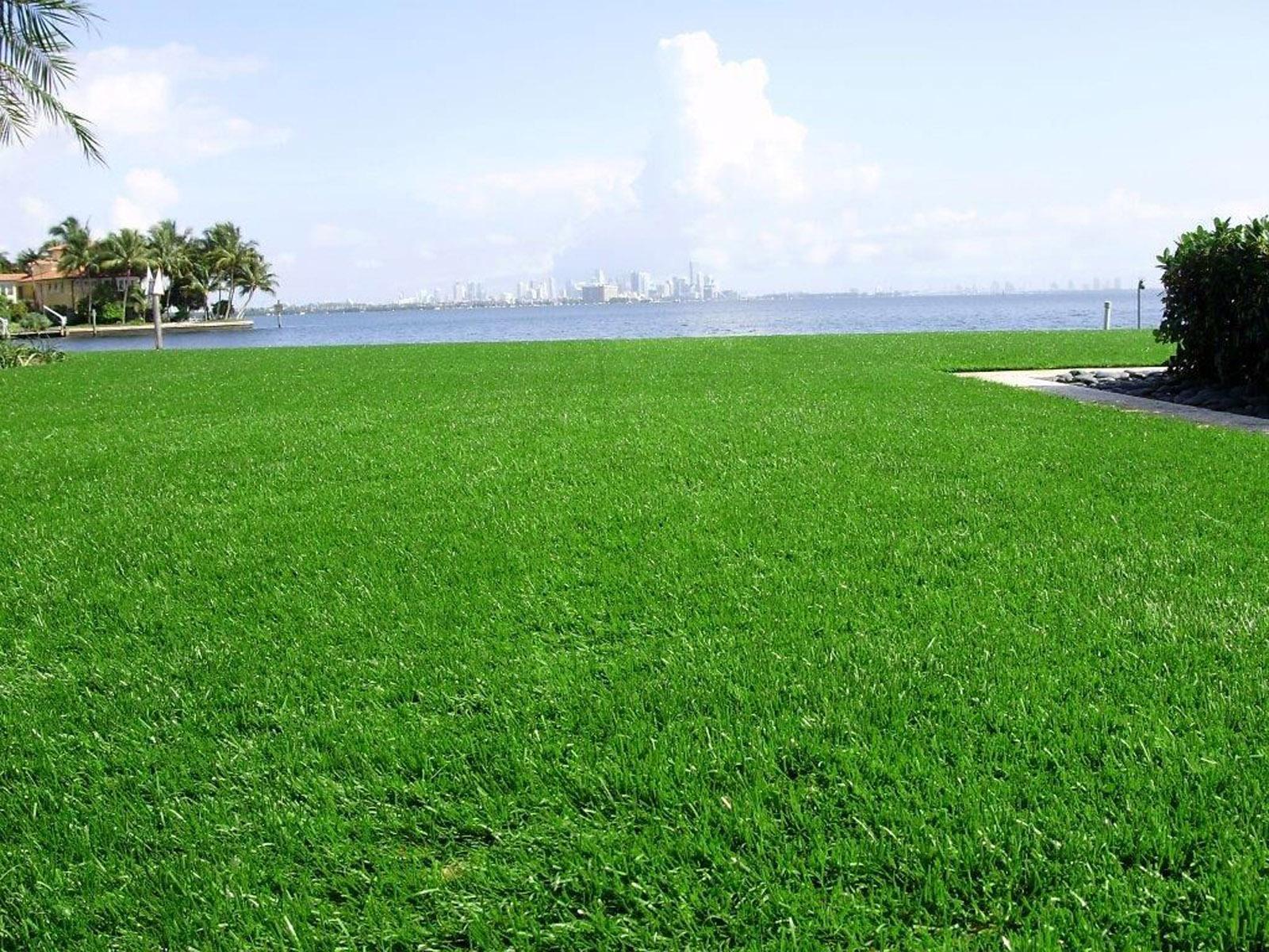 NovaGrass Lawns - LAWN, GOLF & PLAY - NGI Sports