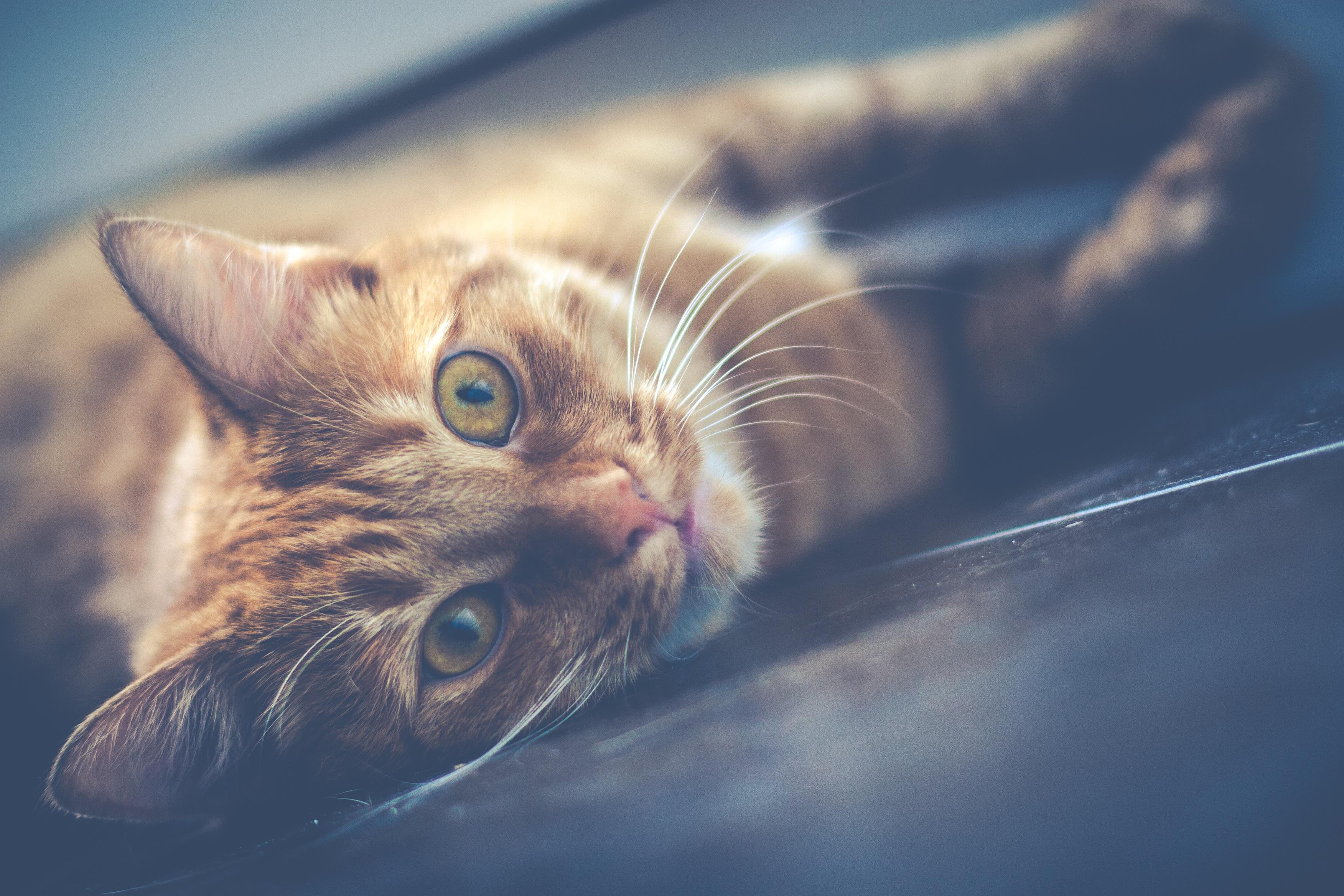 Lazy cat photo