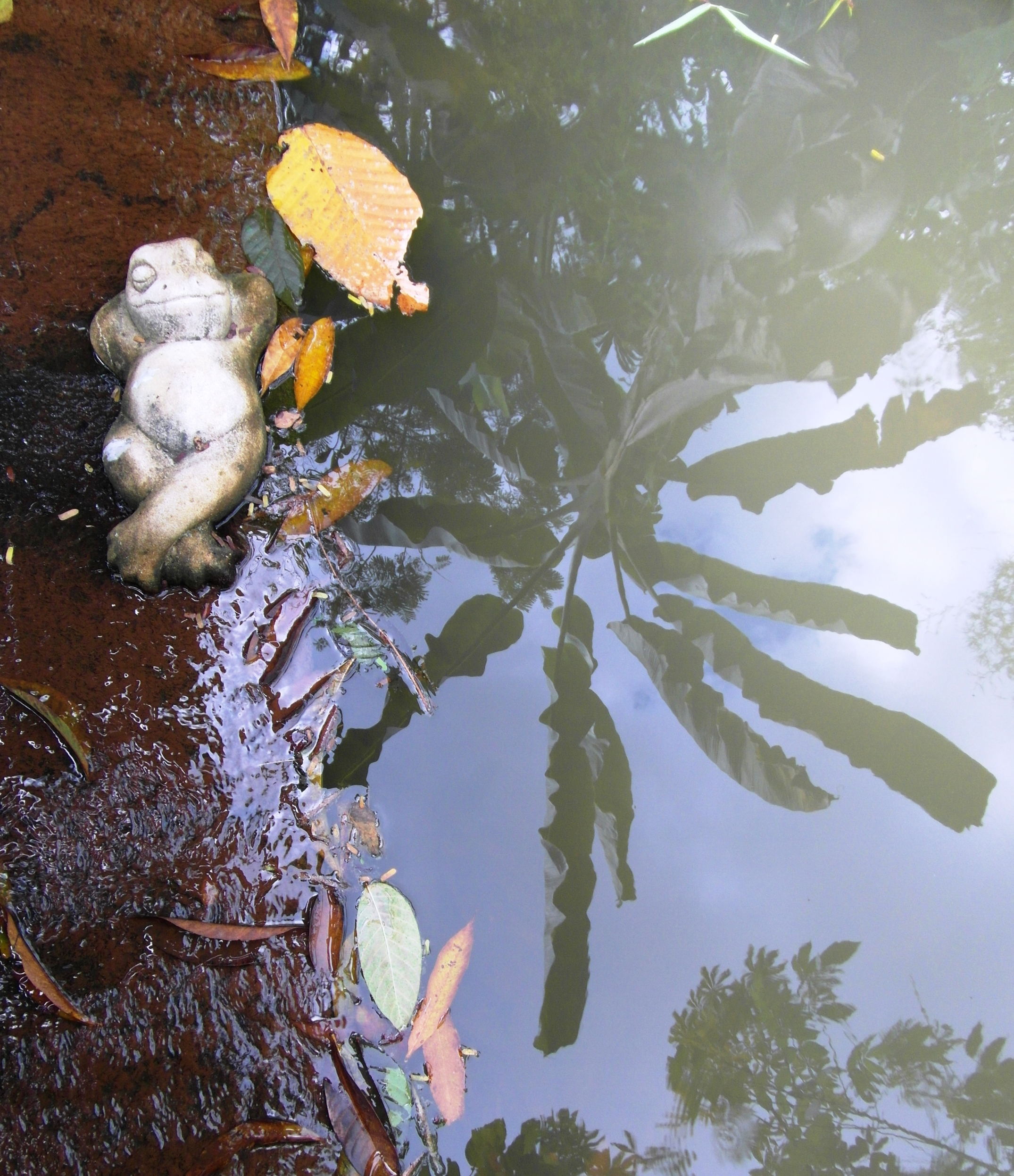 Lazy Frog, Asia, Relaxing, Tropical, Tree, HQ Photo