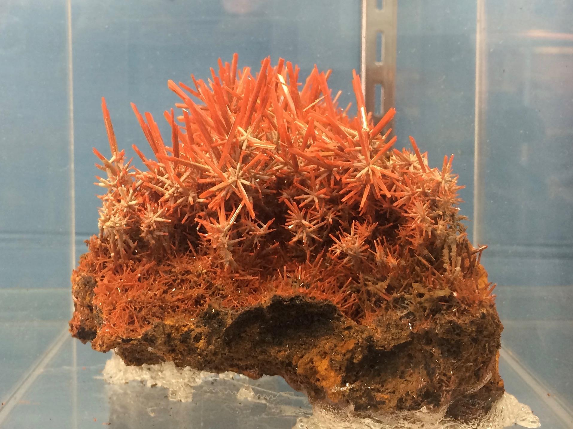 Crocoite - Lead Chromate crystals from Zeehan, Tasmania : rockhounds