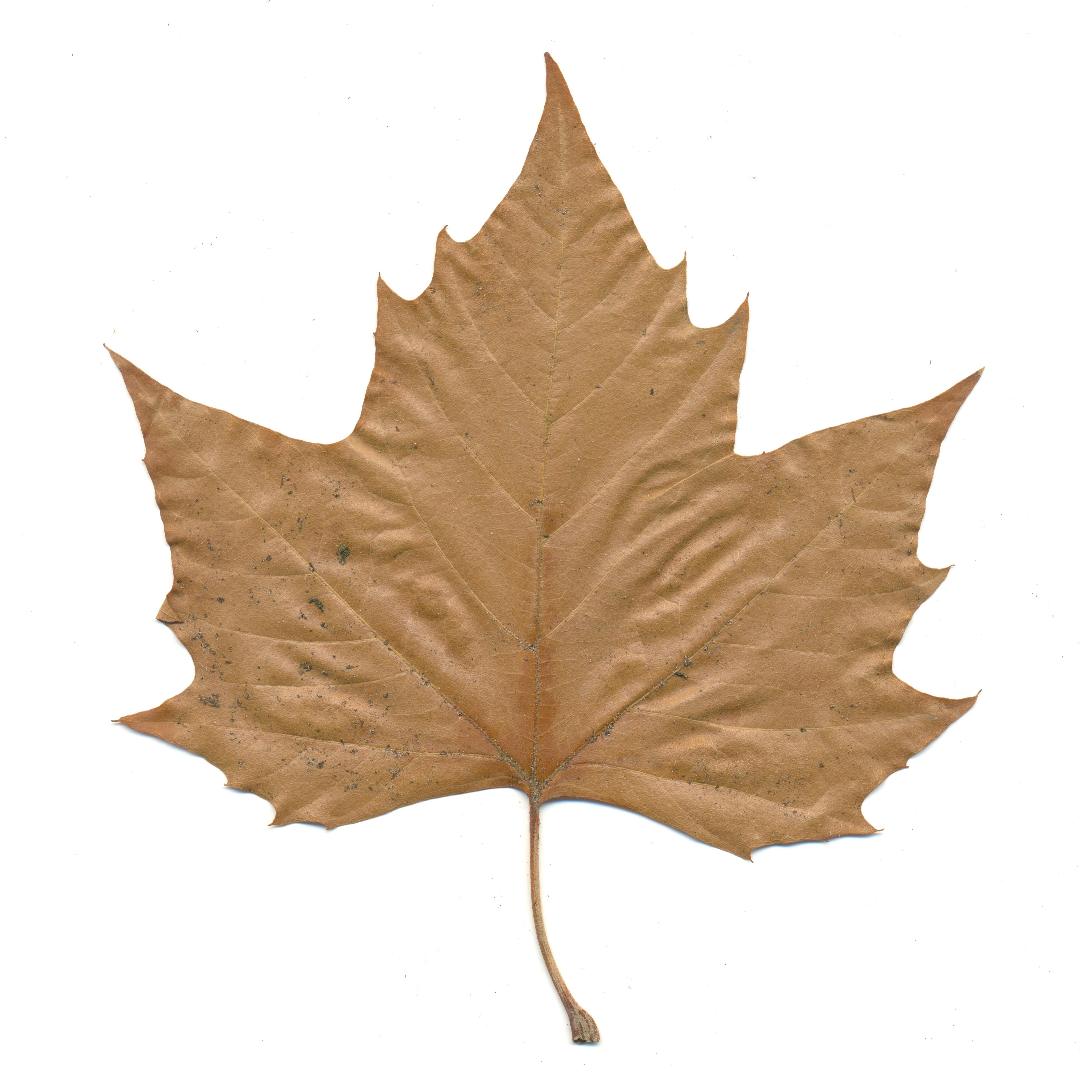 P Contour Line Leafs 3 5 - Lessons - Tes Teach