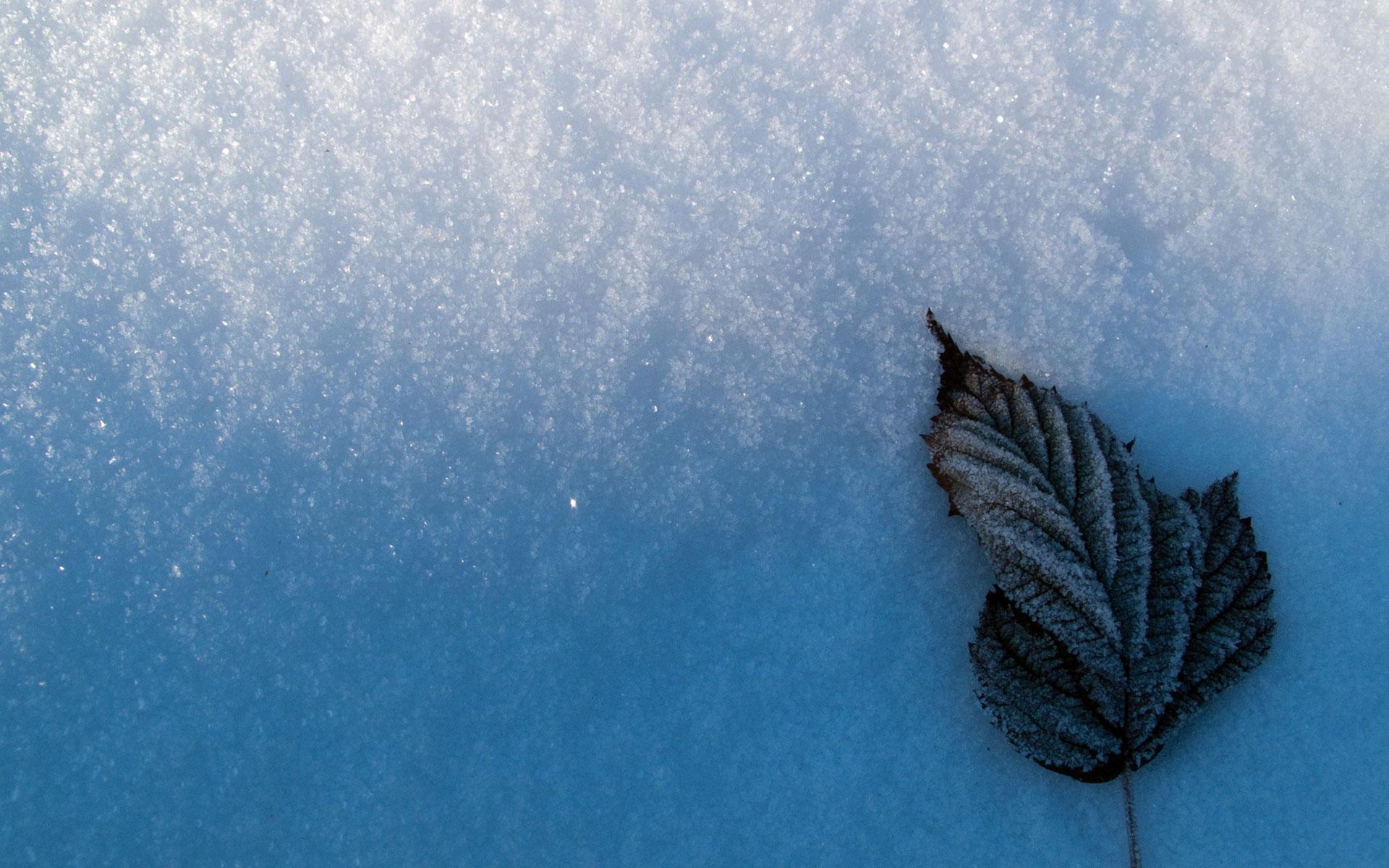 Leaf In Snow #6976715