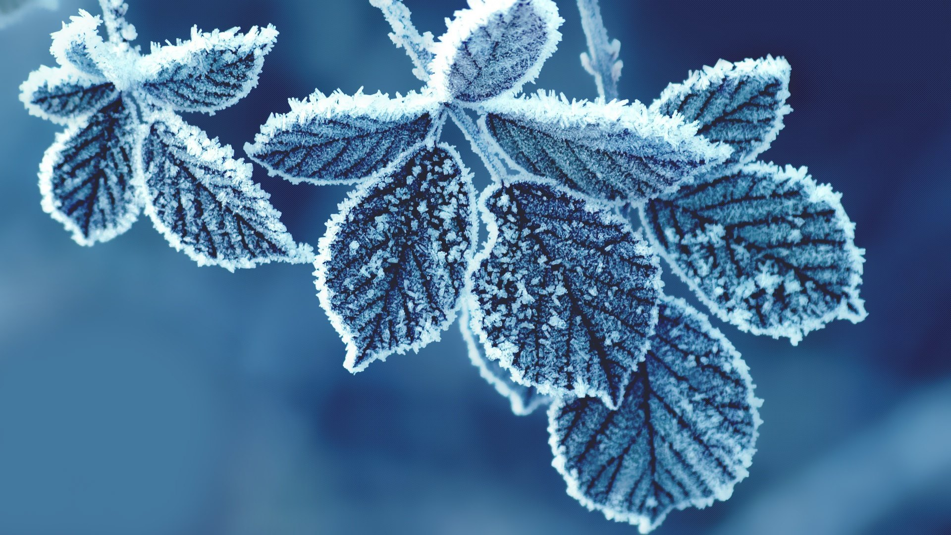 Snow on Leaf Wallpaper | Nature HD wallpapers