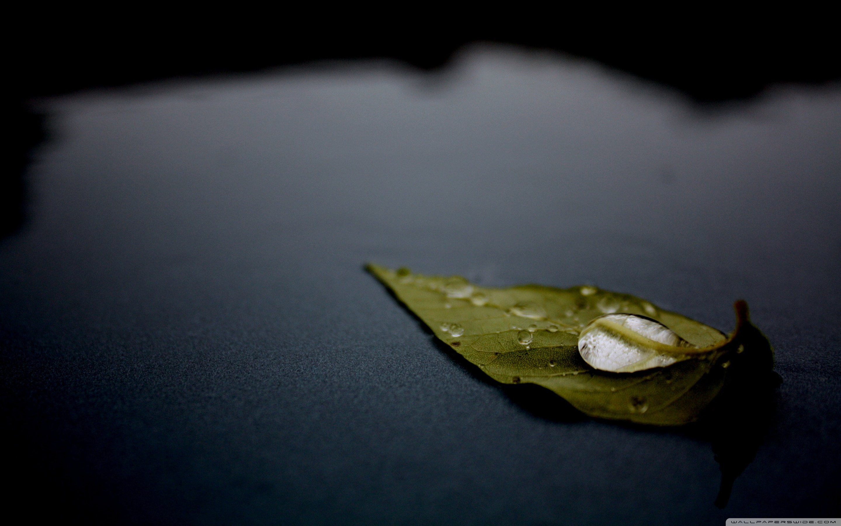 Leaf on water photo