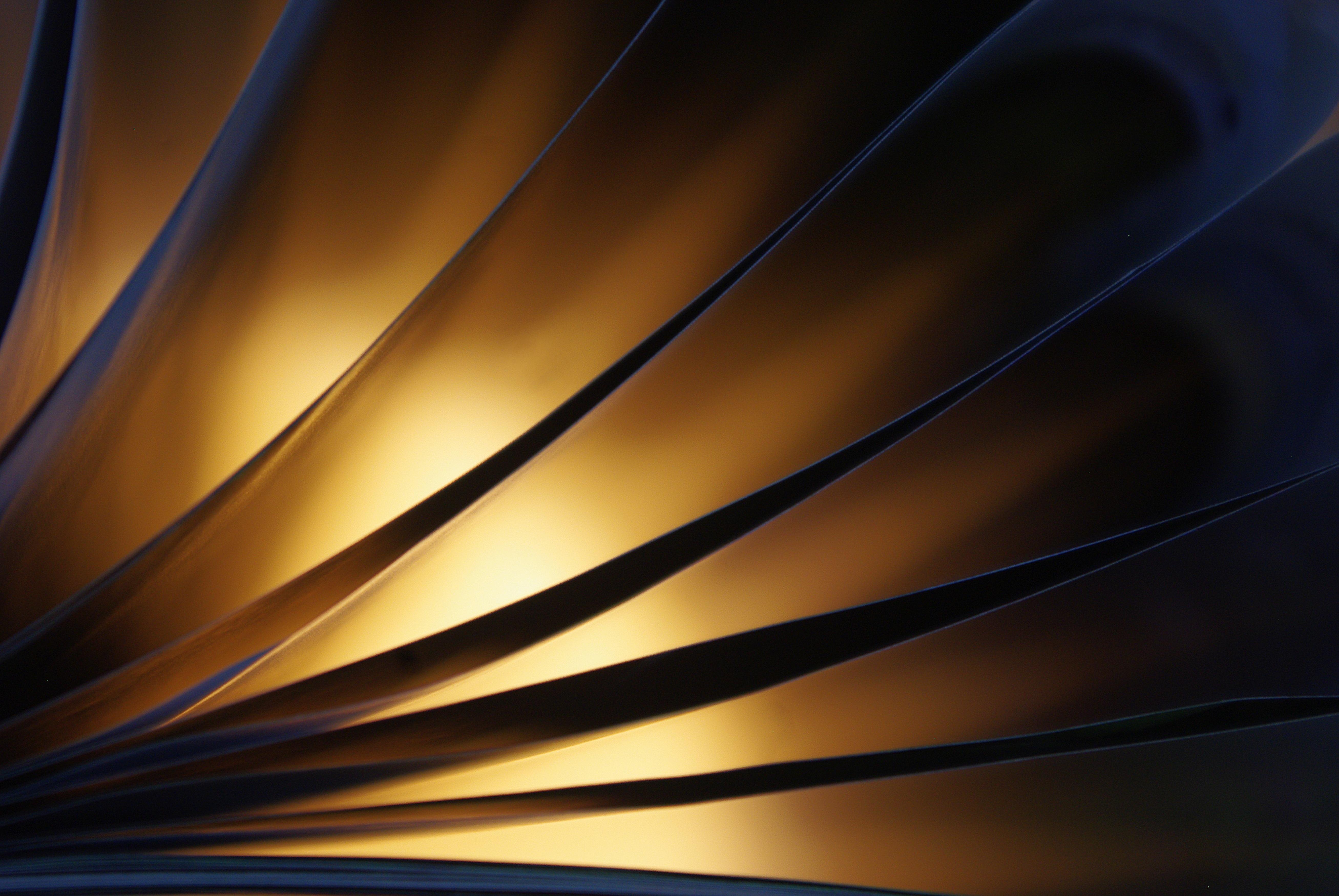 Leaf Texture, Design, Leaf, Light, Texture, HQ Photo