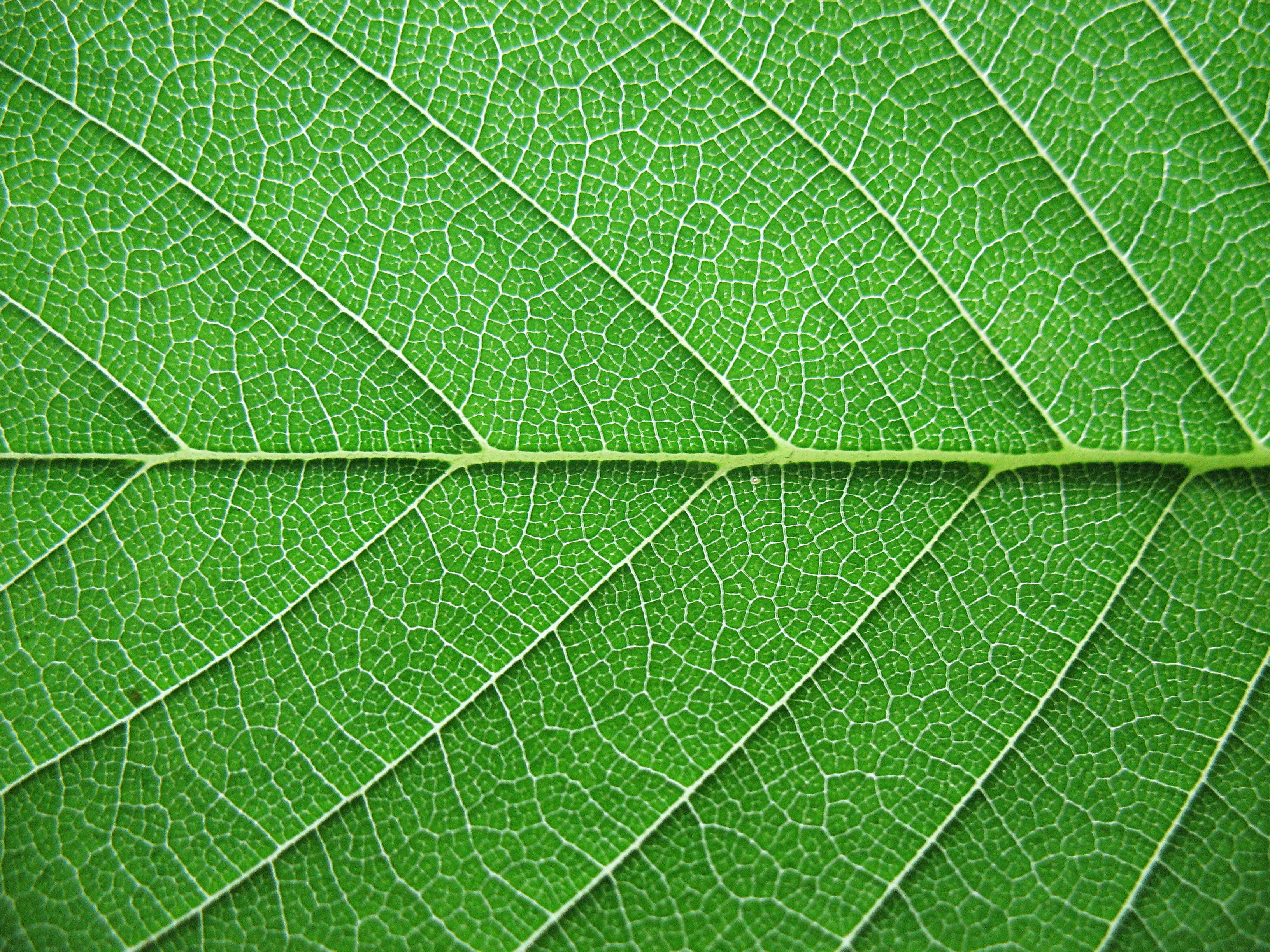 Nature Leaves Background Seventy-five | Photo Texture & Background ...