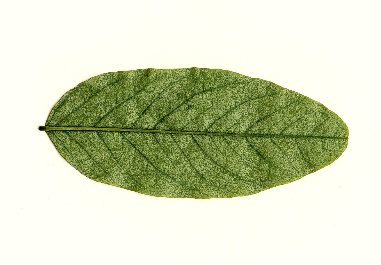 9 leaf textures | Texture Fabrik