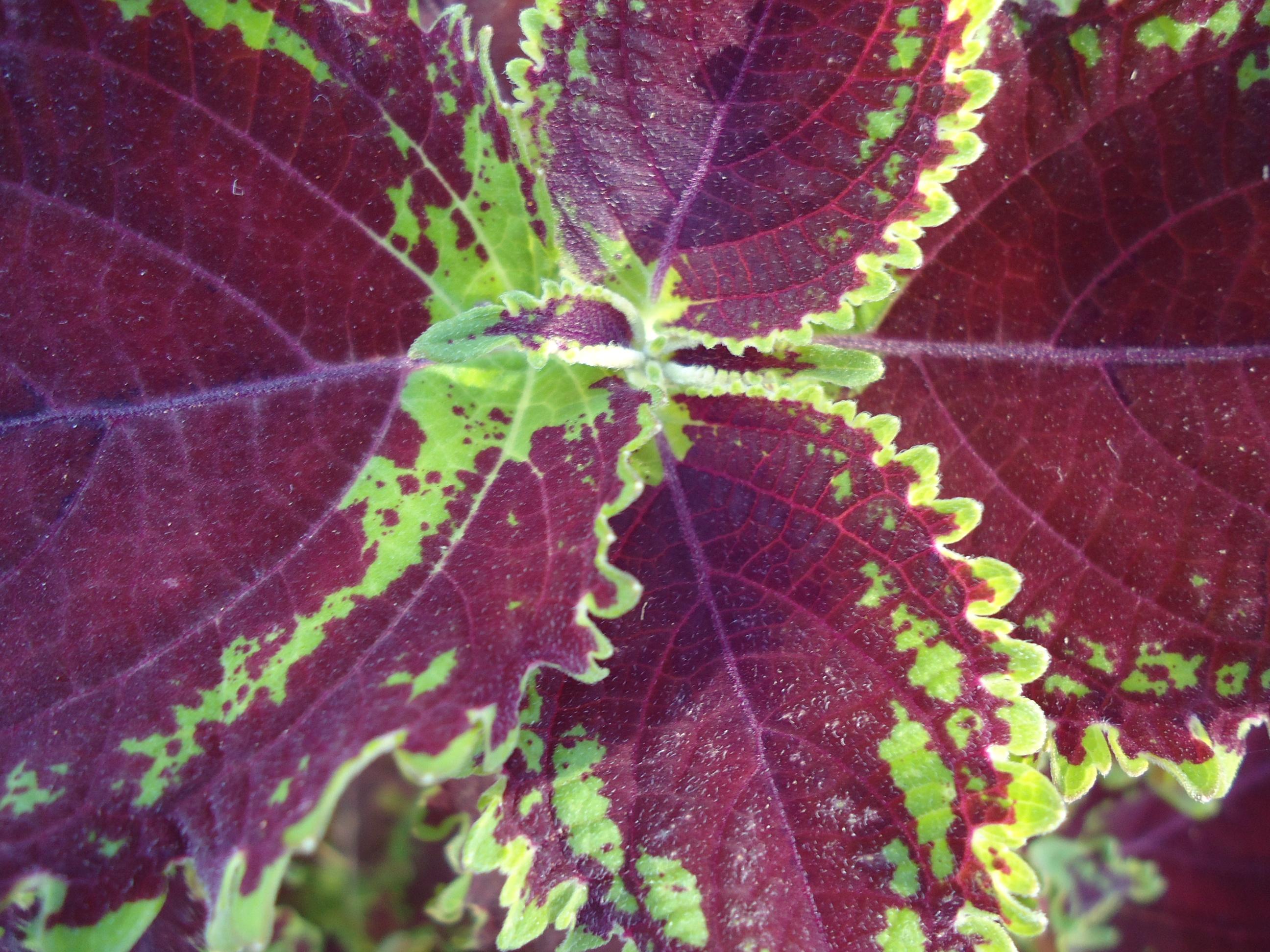 Leaf texture photo
