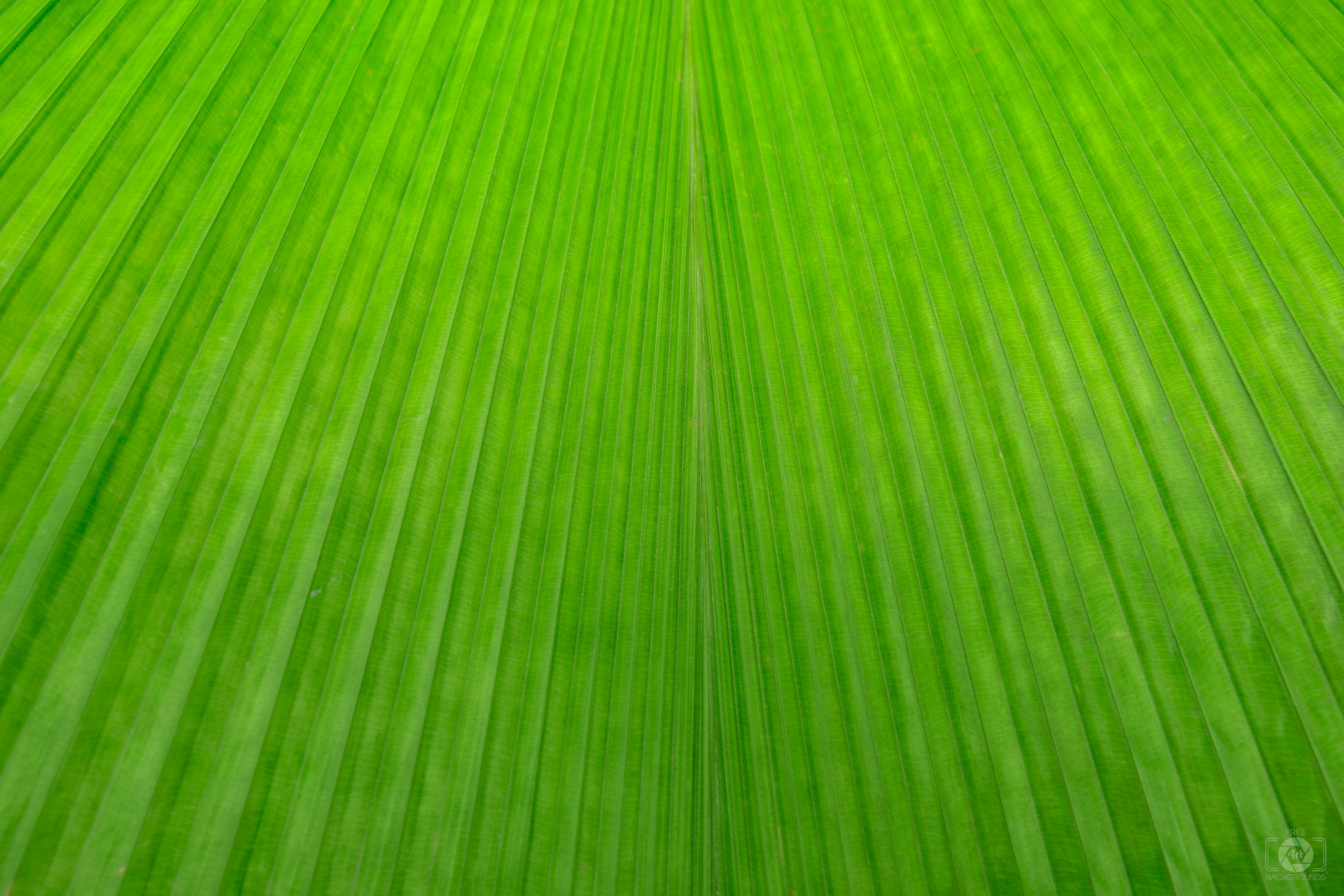 Palm Leaf Texture - High-quality Free Backgrounds