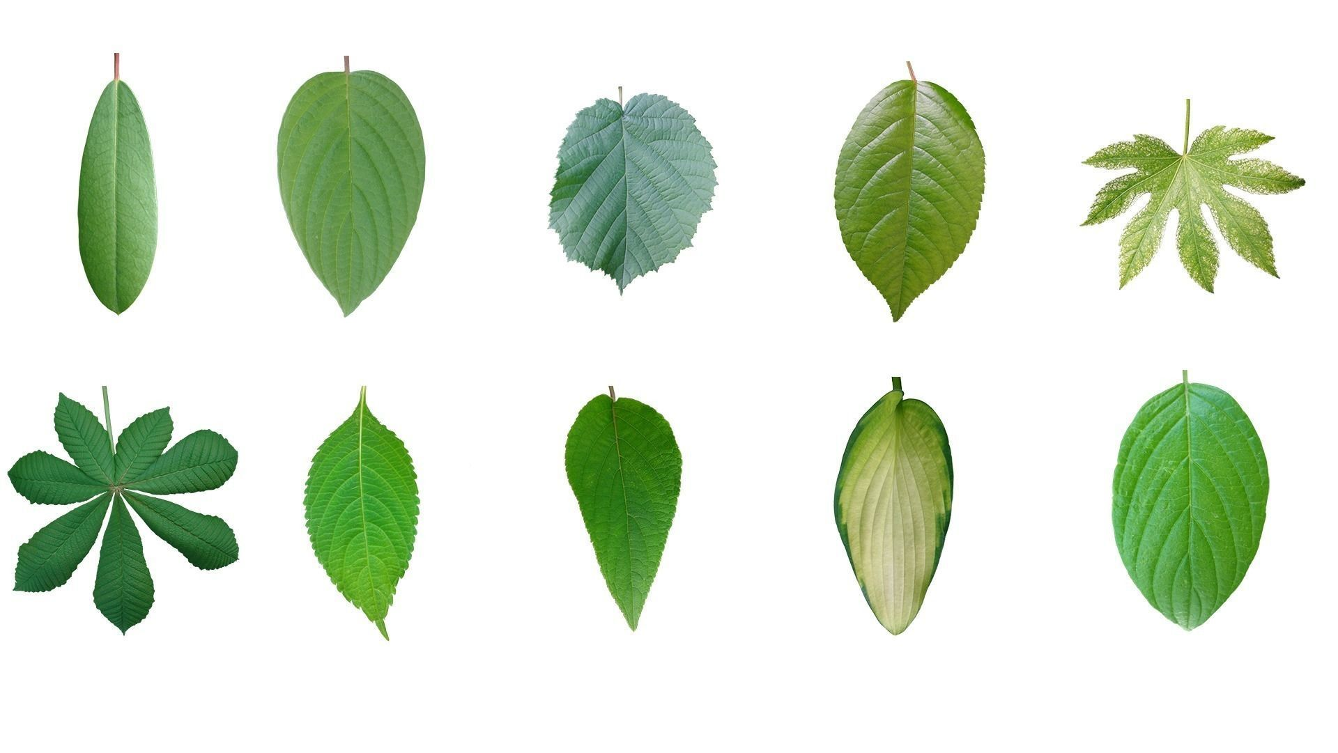 Texture Leaf texture 10 pack - 2nd version - pack number 2 VR / AR ...