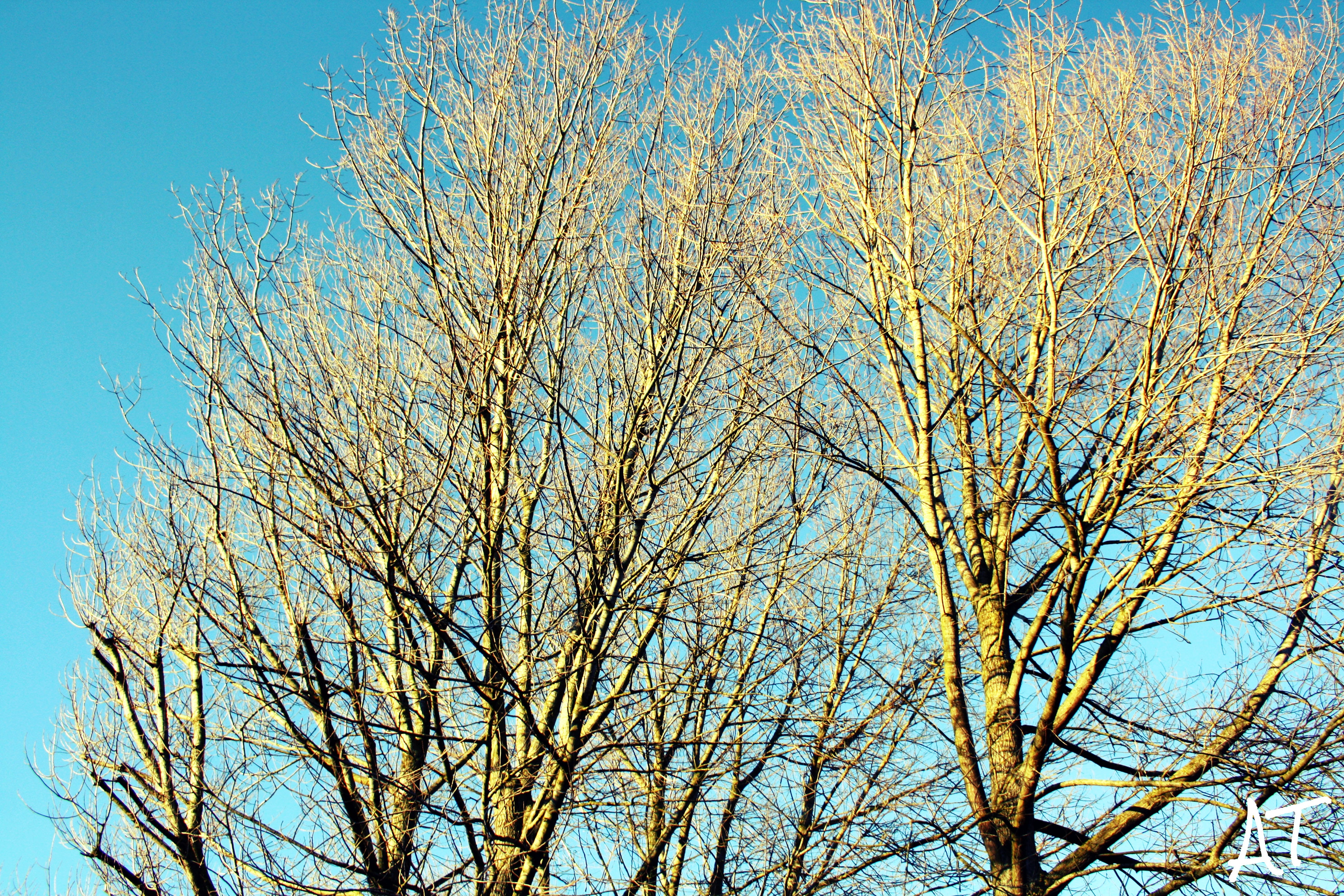 Leafless Tree Under Blue Sky at Daytime, Bark, Branches, Bright, Daylight, HQ Photo