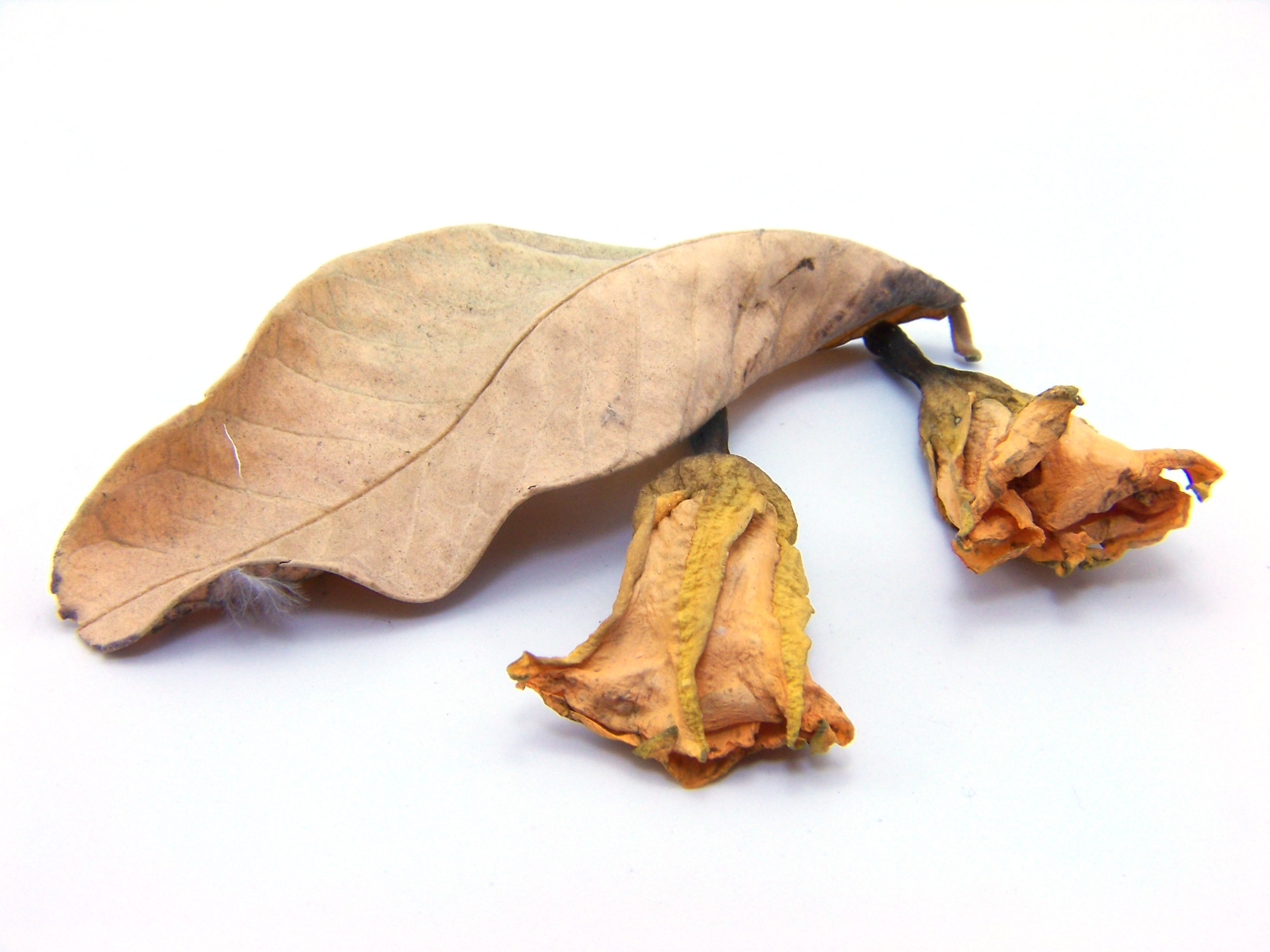 Leafs, Abstract, Season, Nature, Old, HQ Photo