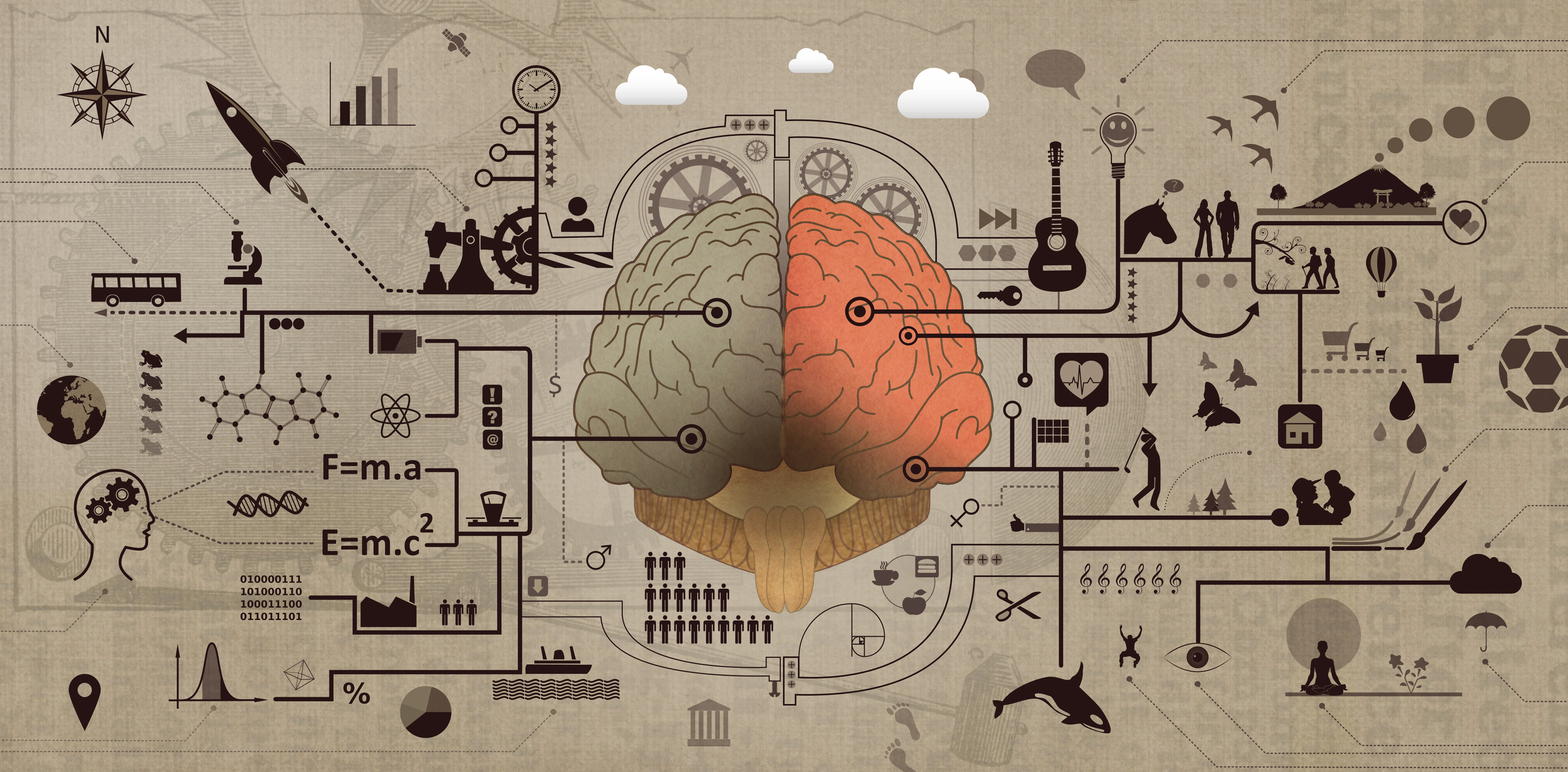 Learning and education - brain functions development concept photo