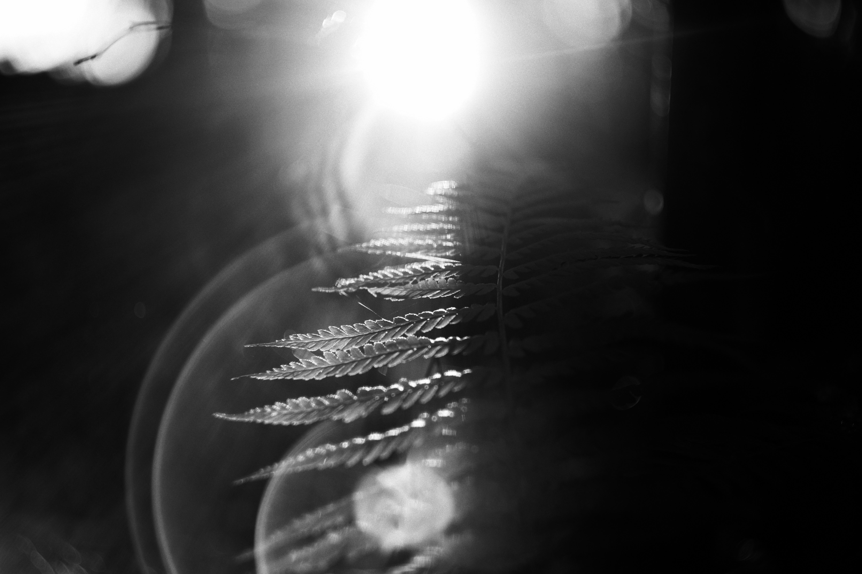 Leaves, Sunlight, Plants, Light, Jungle, HQ Photo