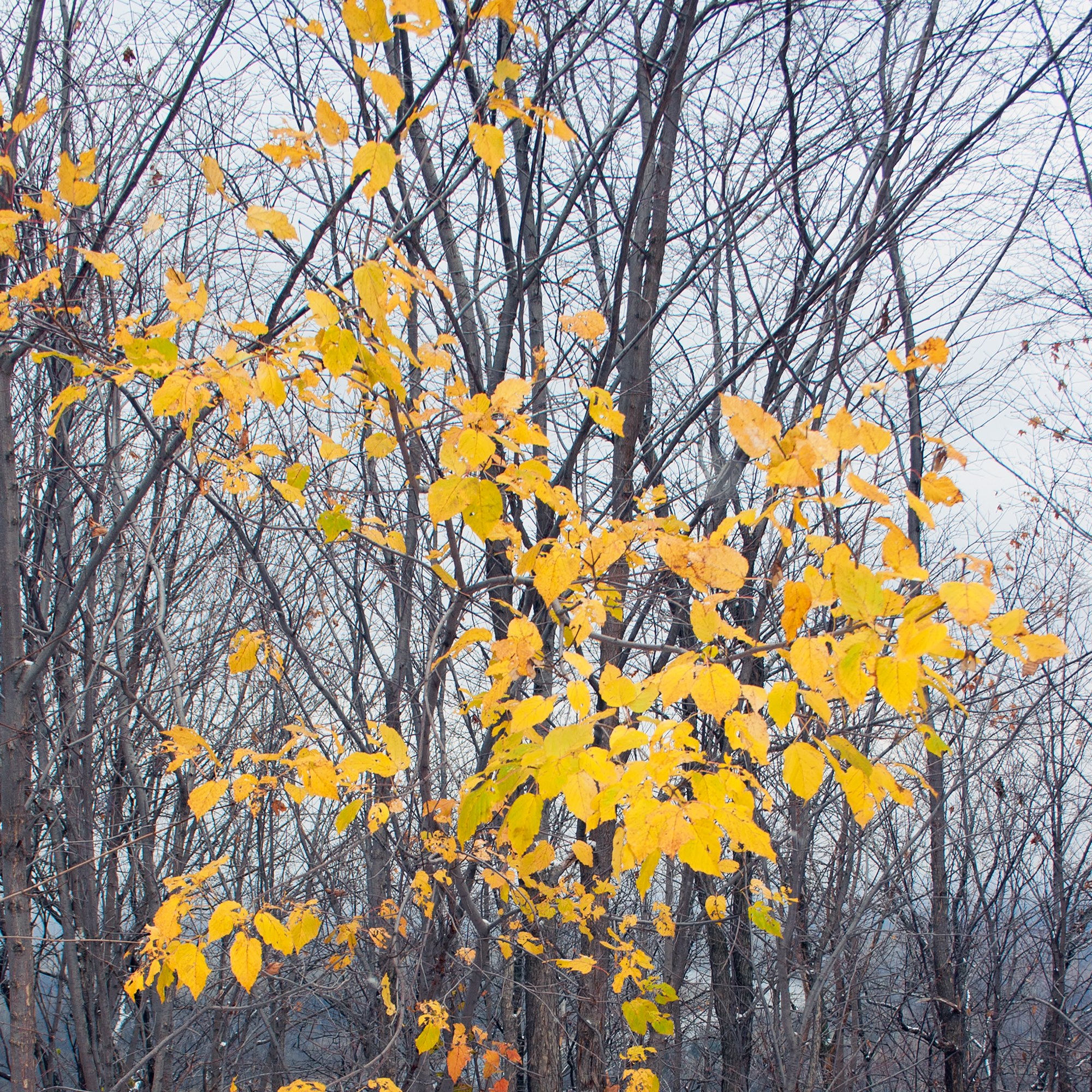 leaves, Wood, Yellow, Winter, Tree, HQ Photo