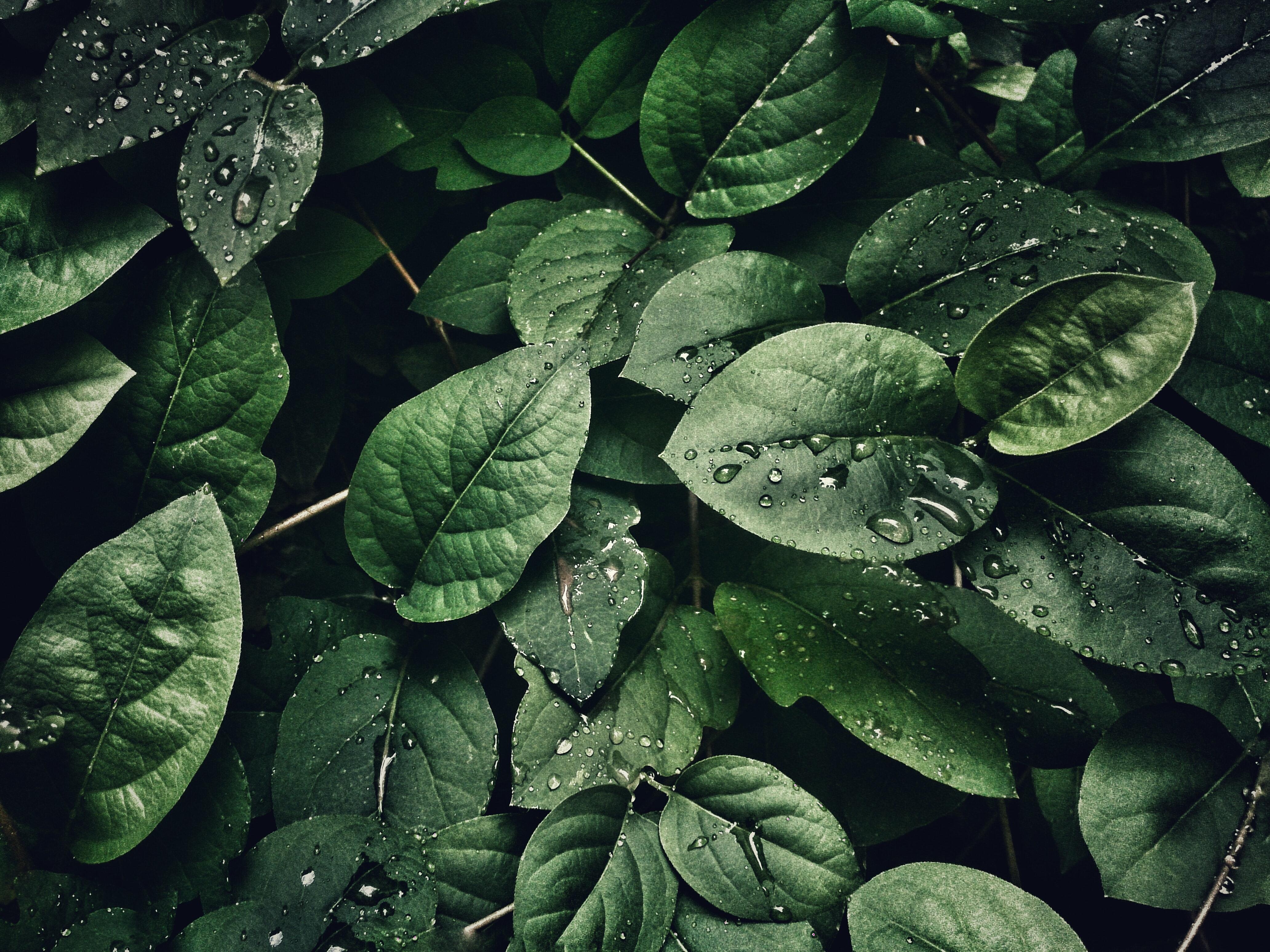 leaves nature pexels jooinn