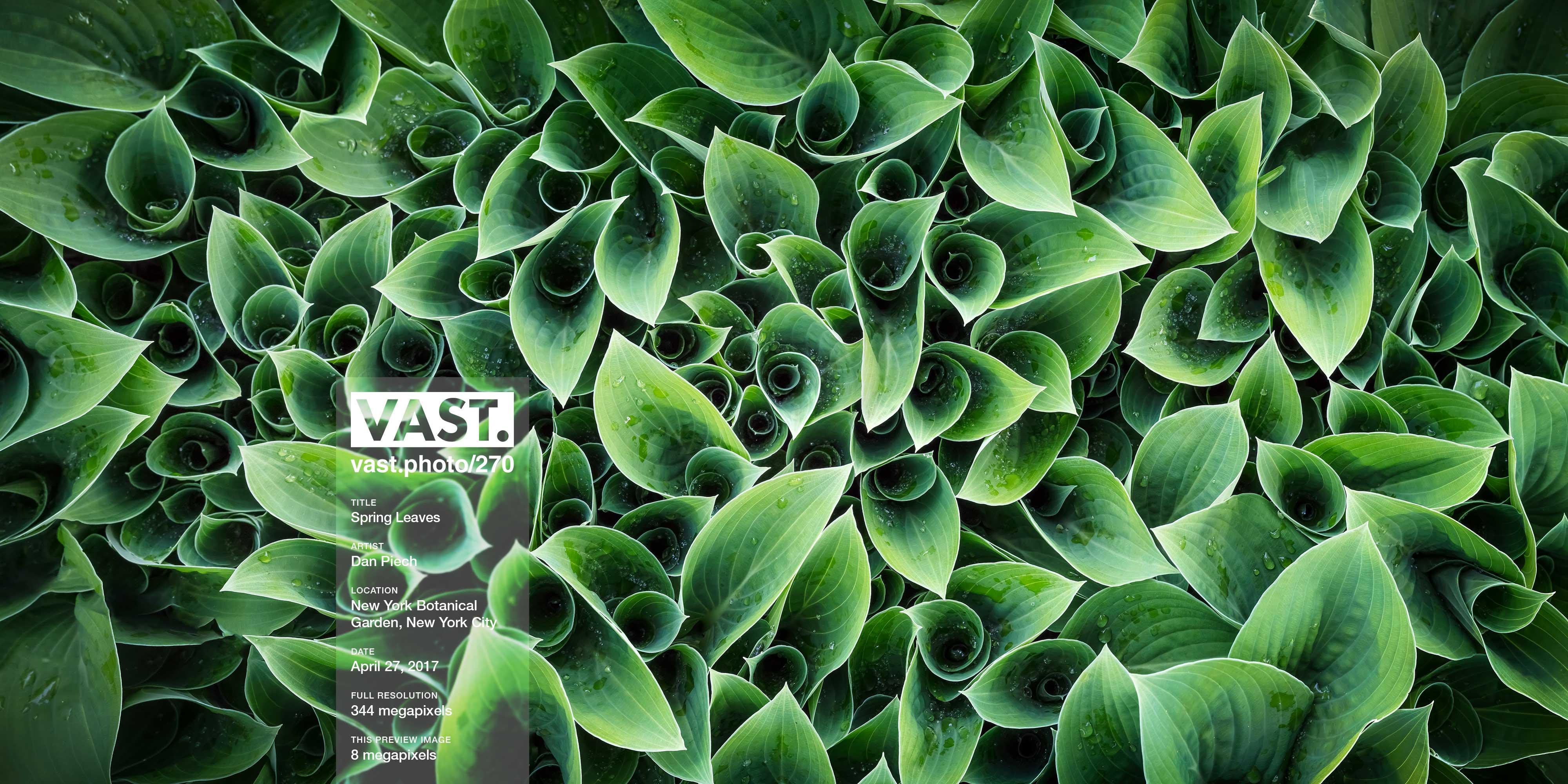 Macro Photos of Leaves: High Resolution Fine Art Prints - VAST