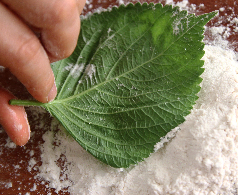 Pan-fried perilla leaves with fillings (Kkaennip-jeon: 깻잎전 ...