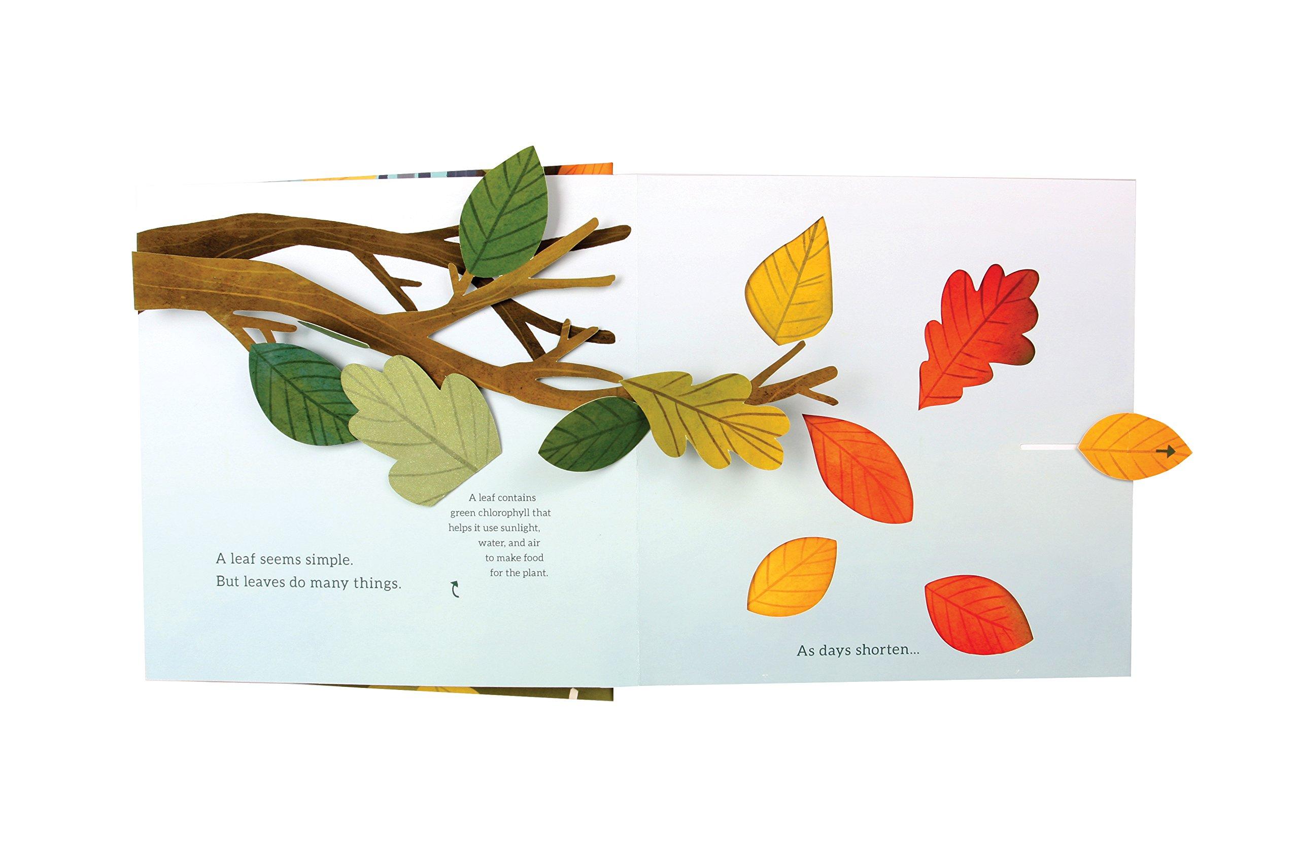 Leaves: An Autumn Pop-up Book: Janet Lawler, Yoojin Kim, Lindsay ...