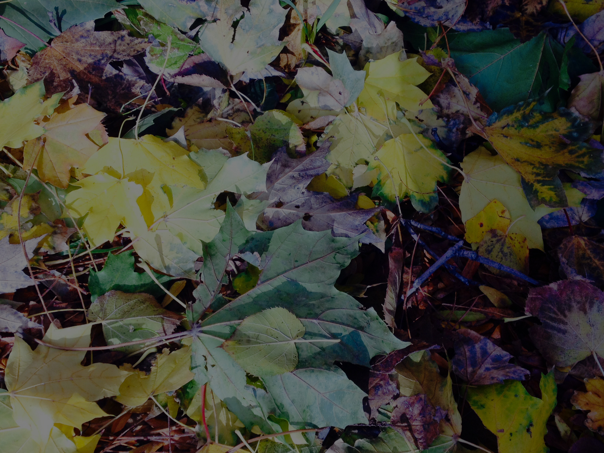 Lake-Friendly Leaves & Yard Care - Clean Lakes Alliance