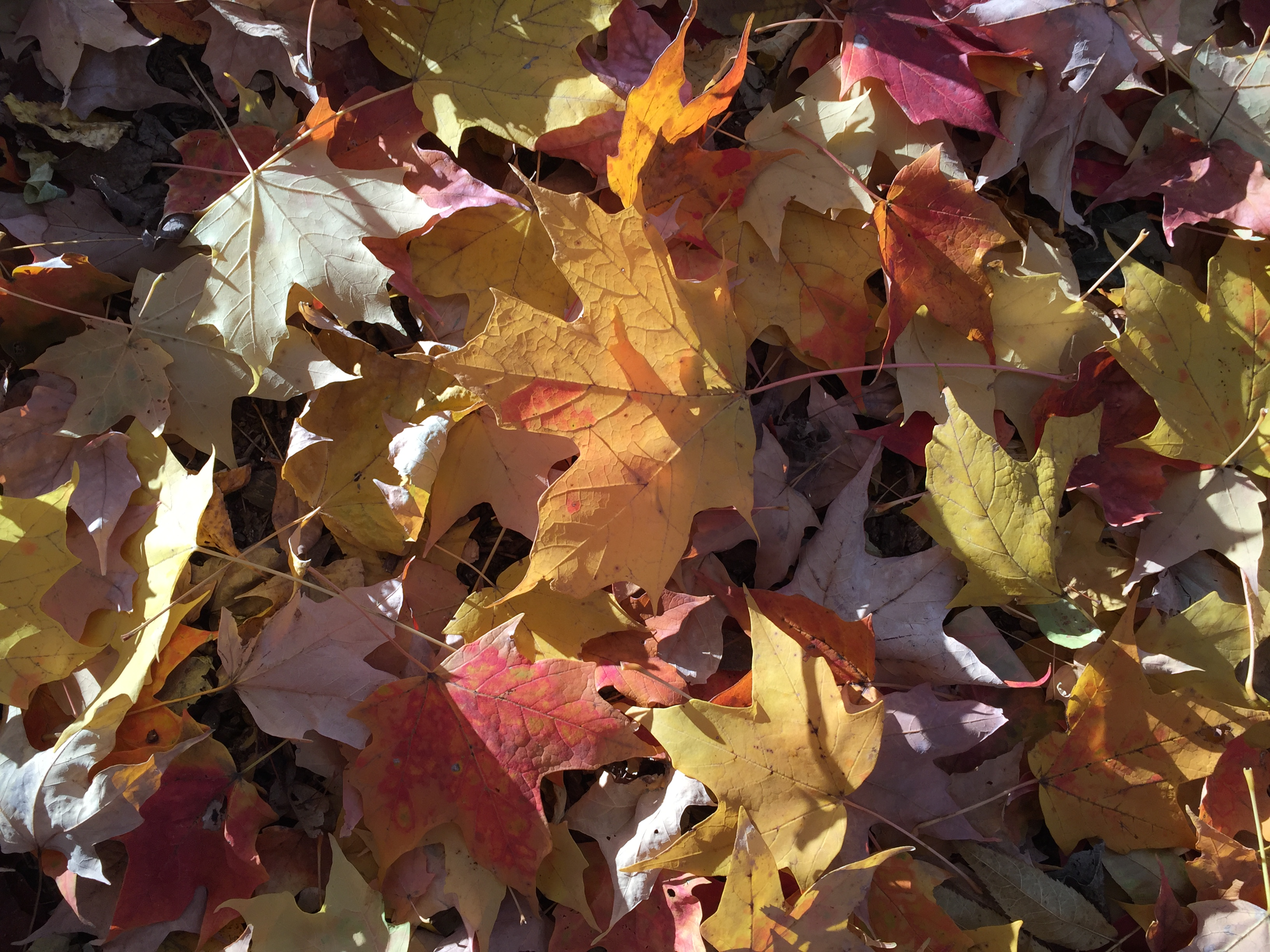 Good Reasons to Stop Blowing Leaves? - EcoBeneficial! ®