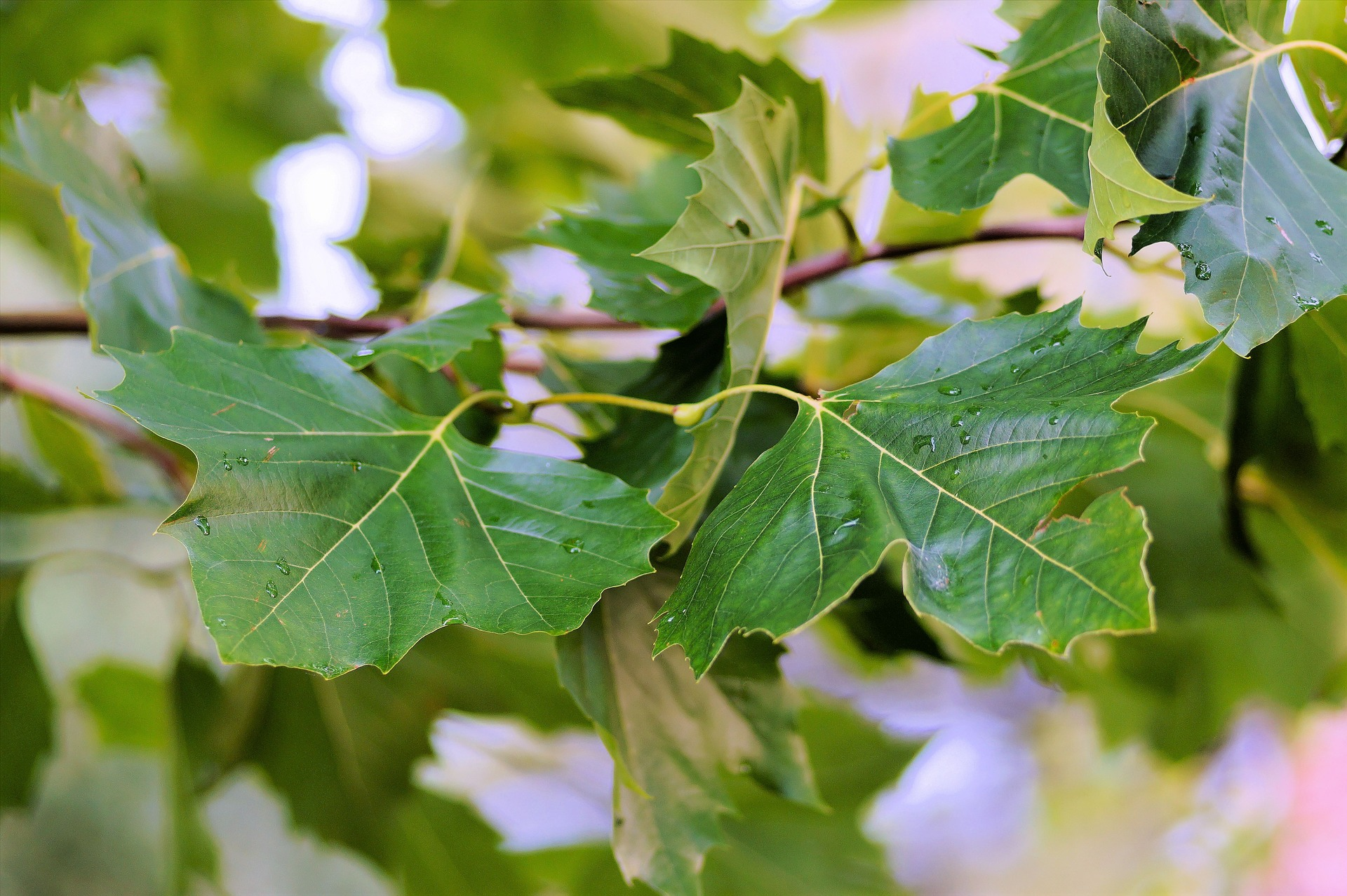 Learning About Leaves: Exploration Science Activities for Students ...