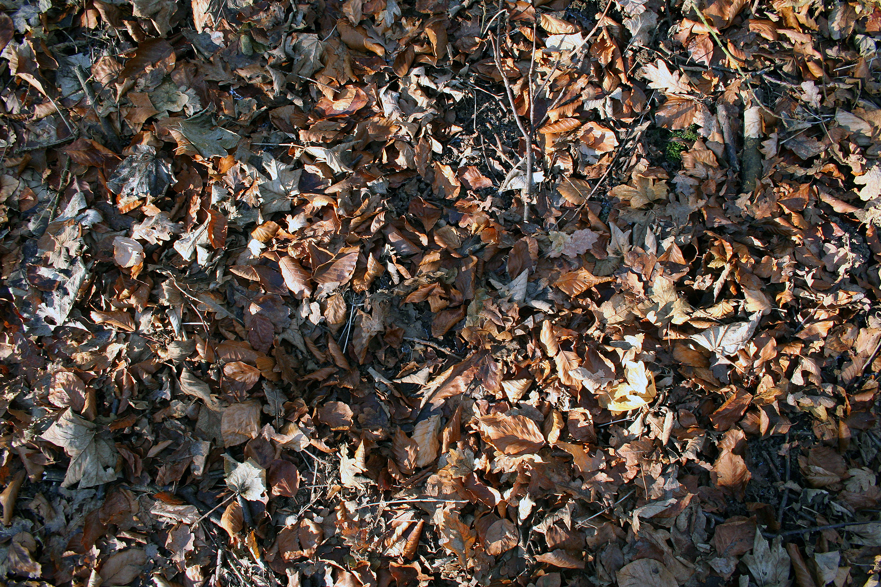 leaves, Fall, Old, Rotten, HQ Photo
