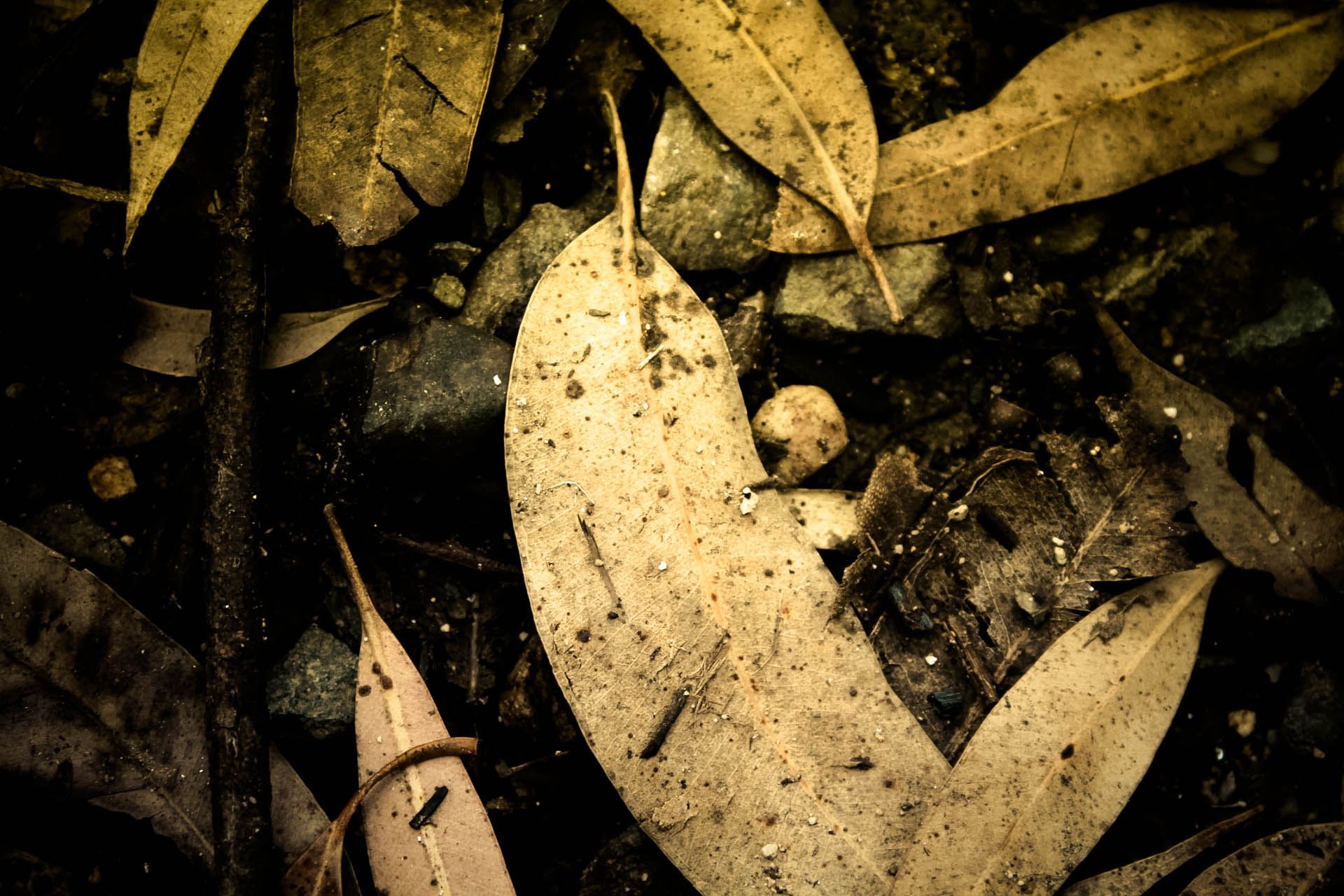 Leaves, Dirty, Nature, Texture, HQ Photo