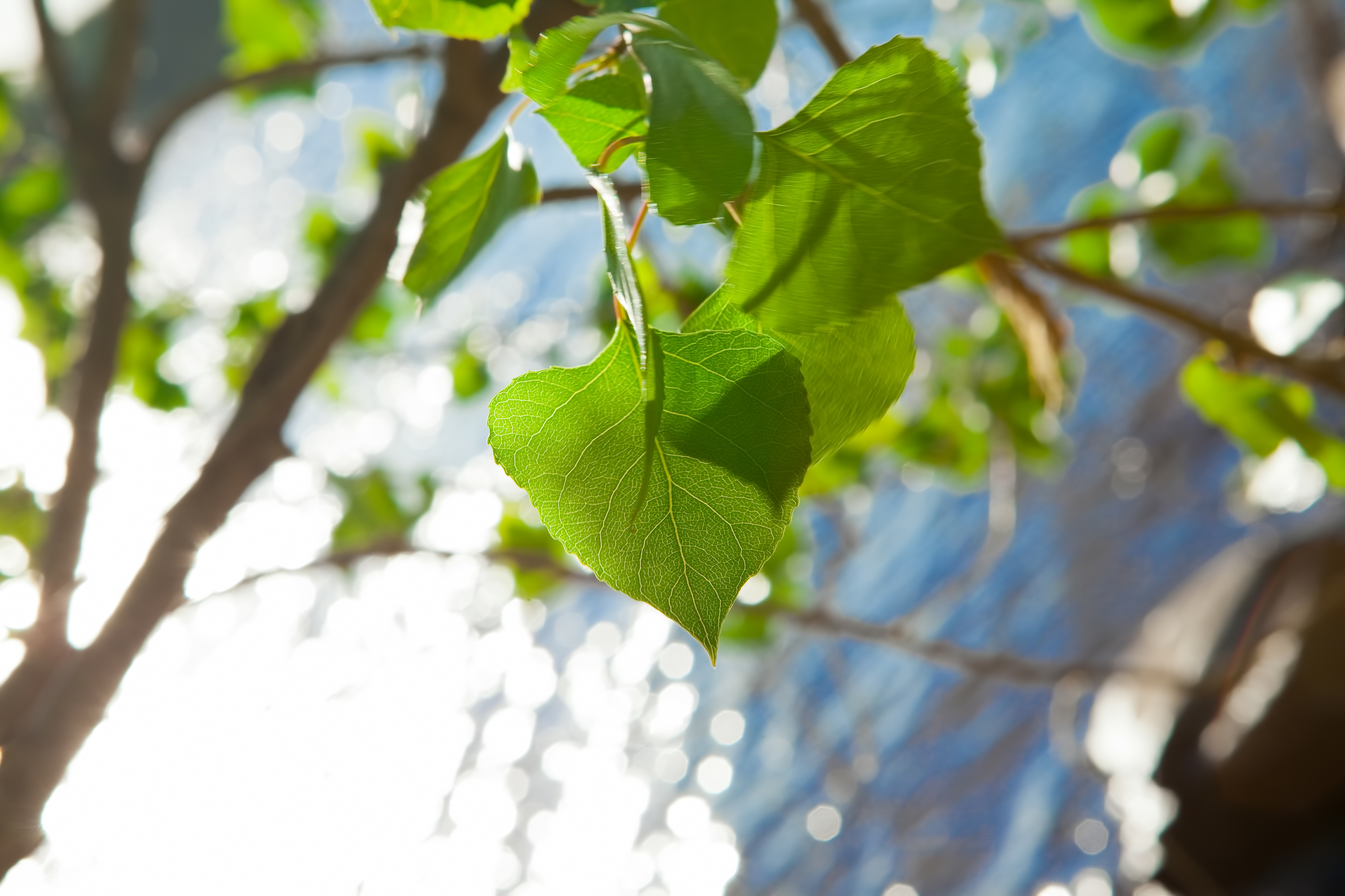 Leaves, Green, Tree, Water, HQ Photo