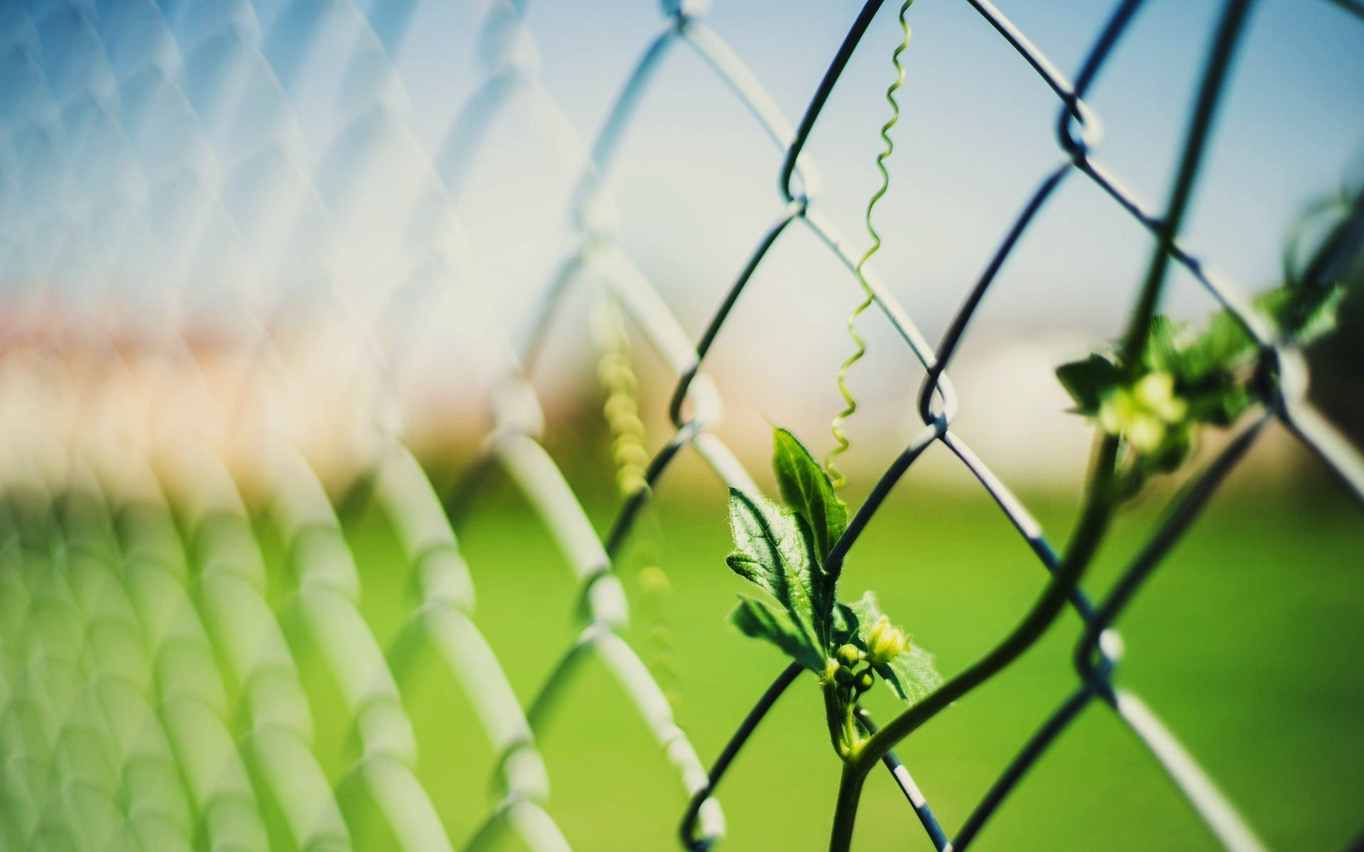 Leaves and fence photo