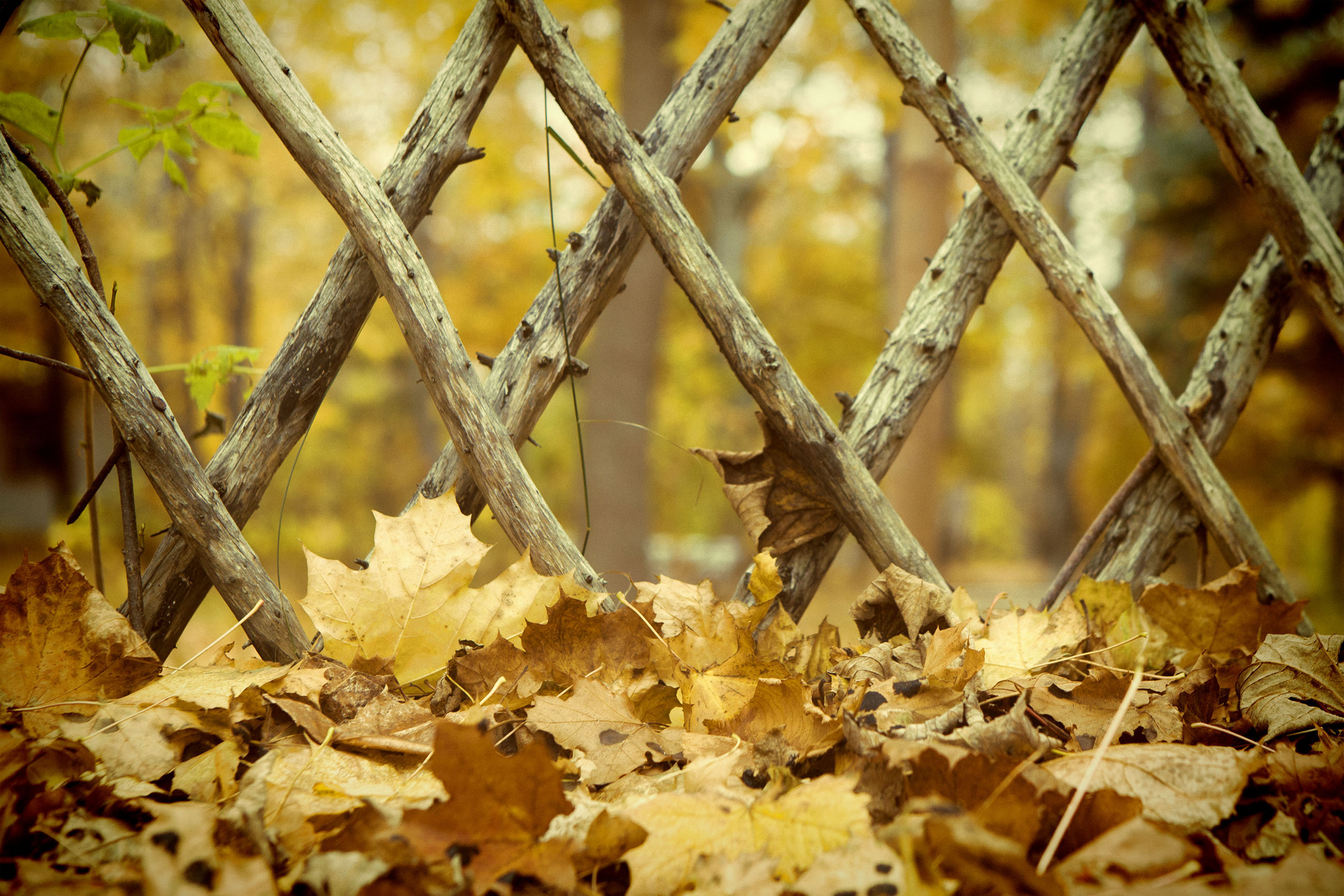 Leaves and fence, Autumn, Nature, Wooden, Wood, HQ Photo