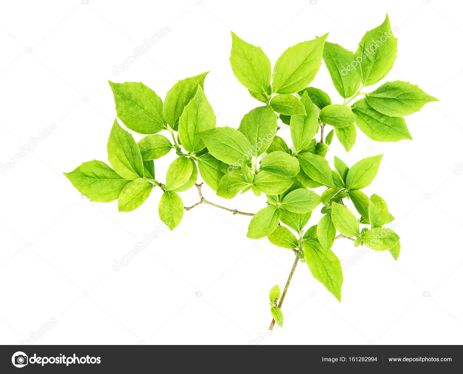 Green leaves isolated white background — Stock Photo © LiliGraphie ...