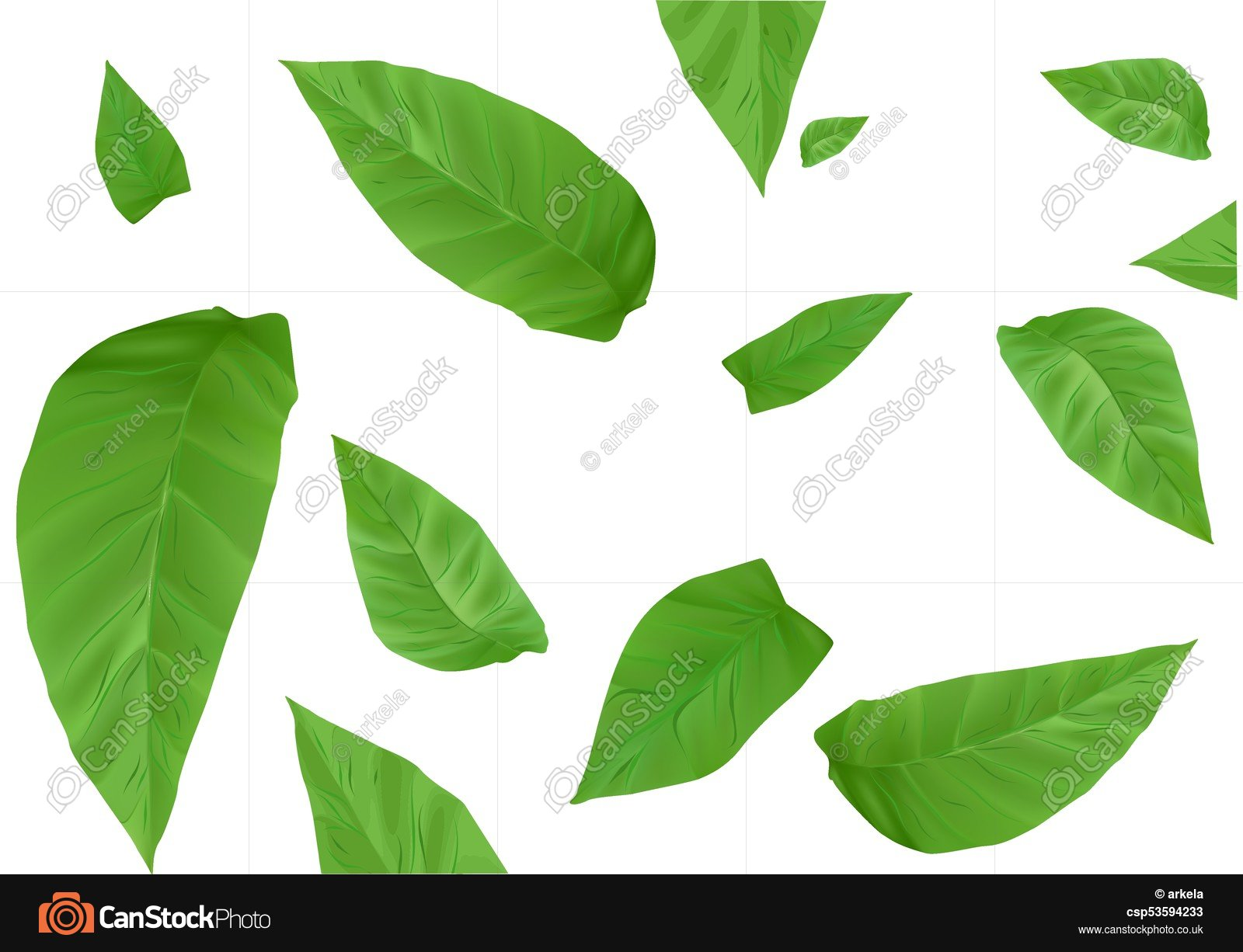 Tobacco leaves background. Tobacco leaves isolated on a... vectors ...