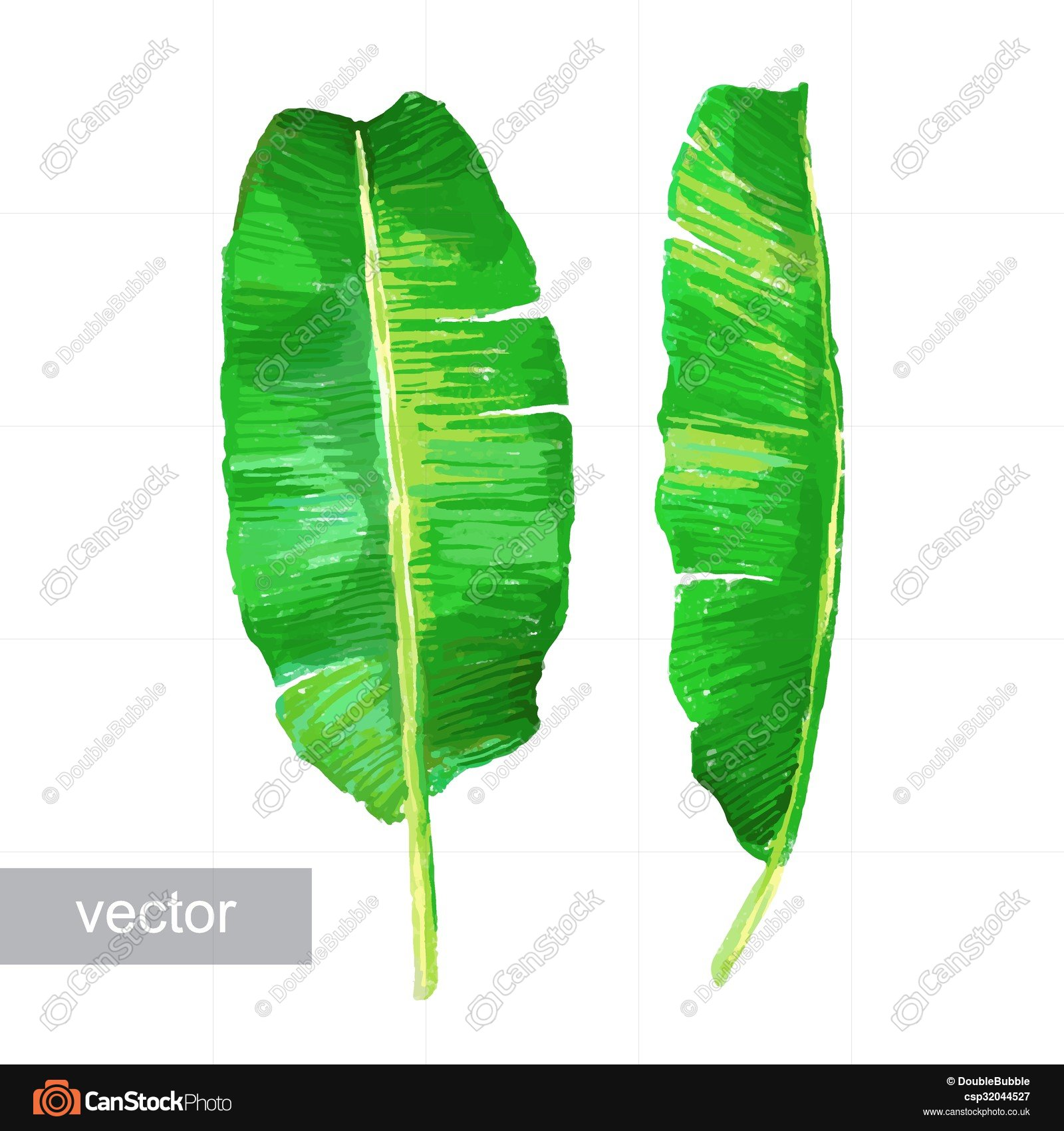 Palm banana leaves isolated on white. set of tropical... vector ...
