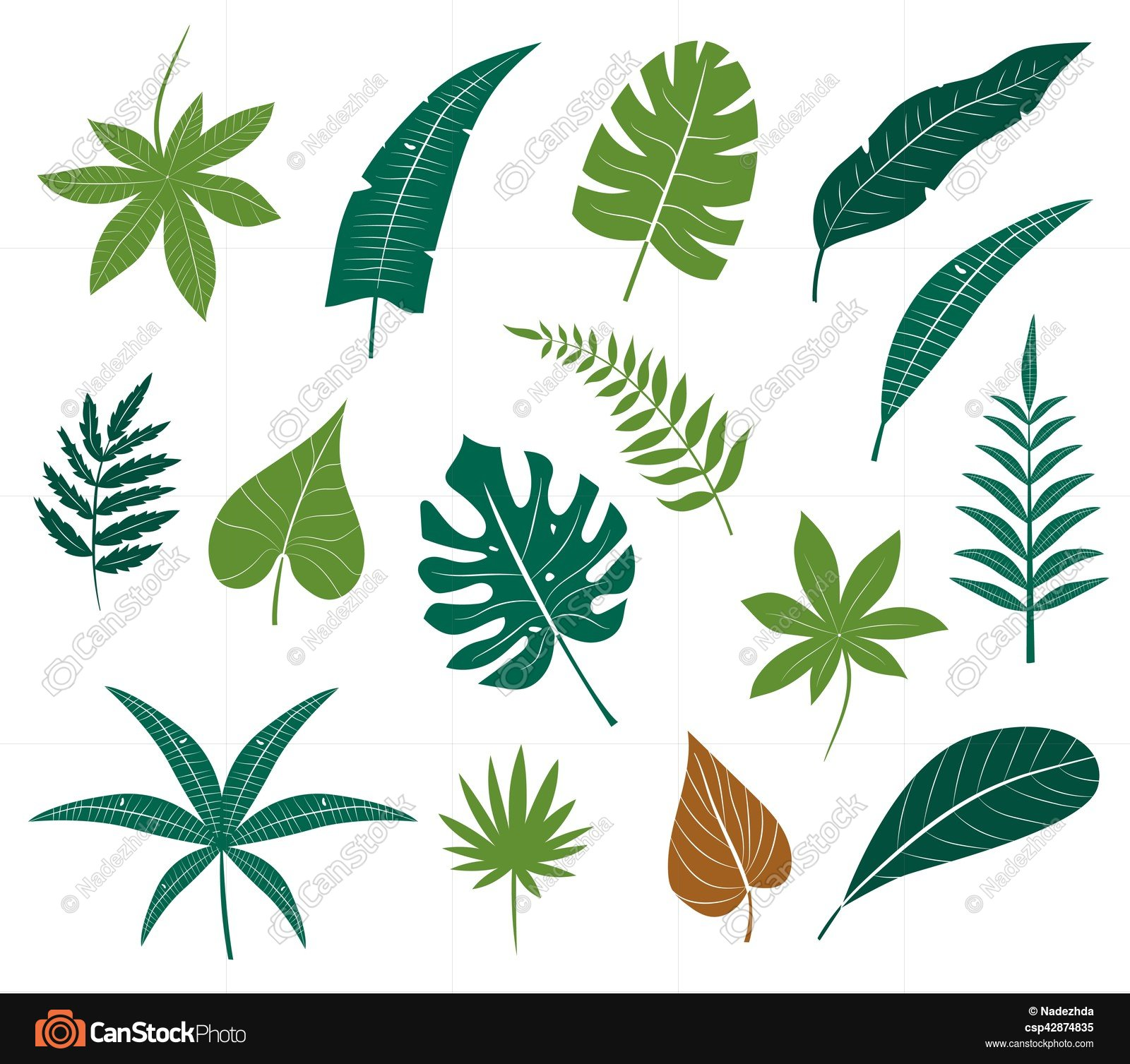 Vector icon set different plants, palm leaves, isolated on ...