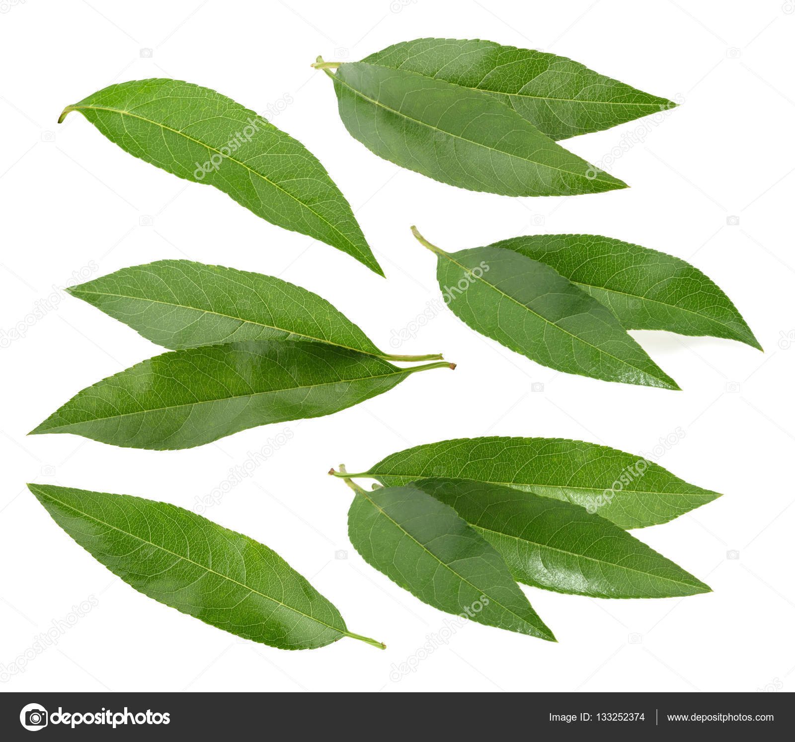 Peach leaves isolated on white background — Stock Photo ...
