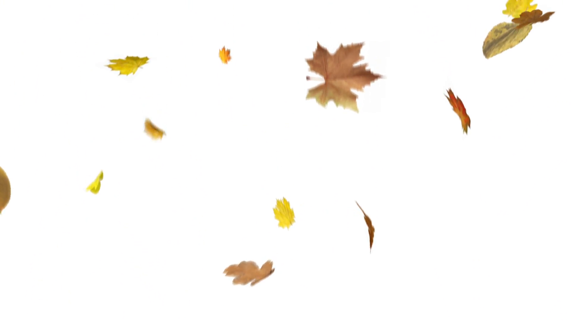 Large Isolated Leaves Falling Loop Motion Background - Videoblocks