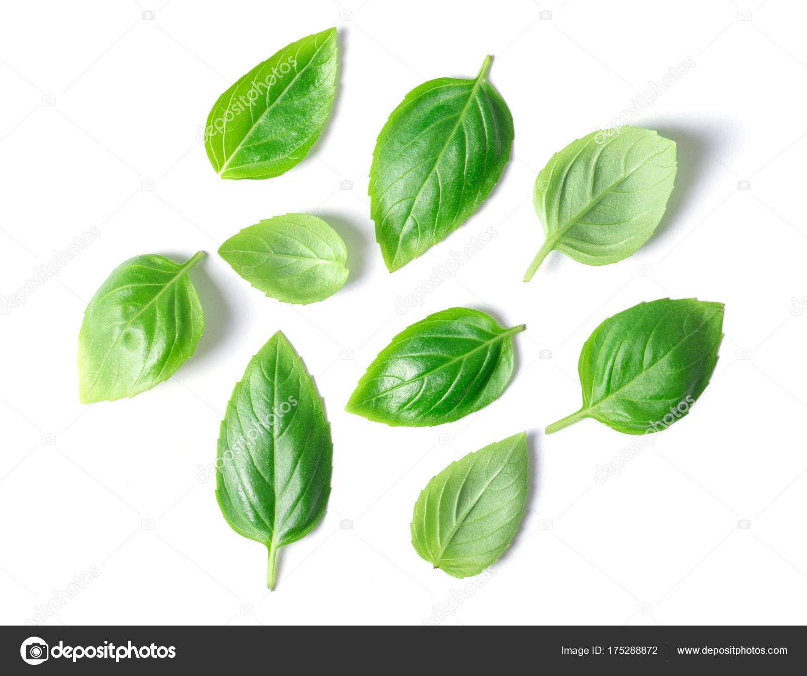 Green Basil Leaves Isolated White Background — Stock Photo ...