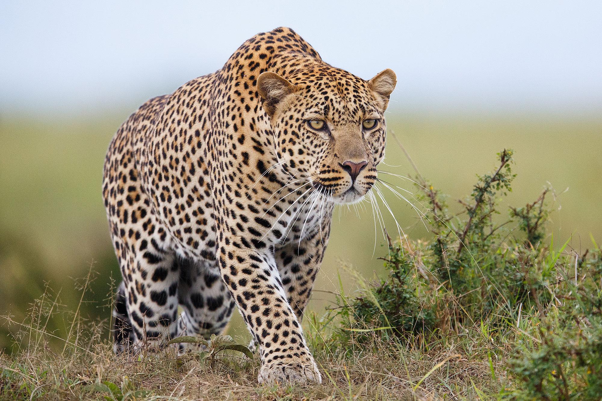 3-Year-Old Boy Killed By Leopard in Ugandan Safari Park | PEOPLE.com