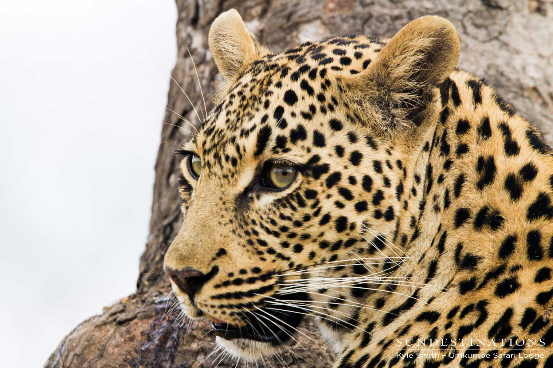 Leopard and Hyenas : A Toxic Friendship