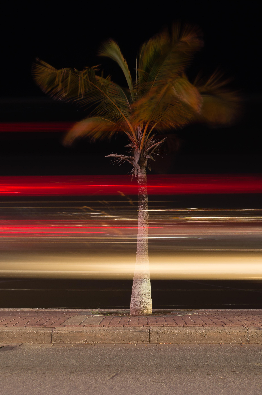 Light Trails at the Boulevard, Bonaire, Light, Night, Palm, HQ Photo